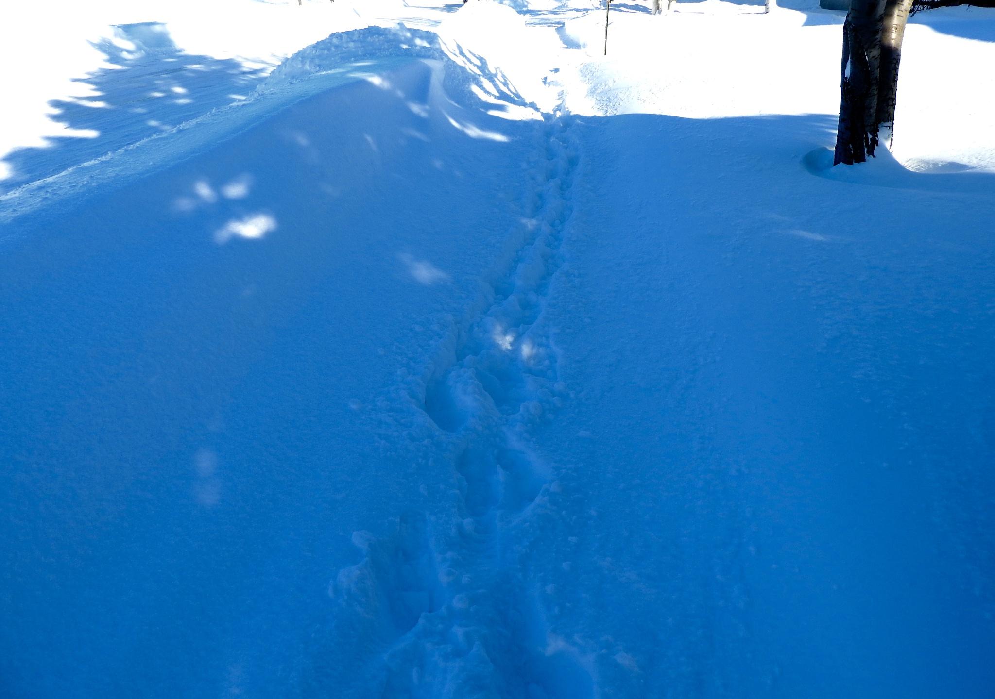 No sidewalk plow yet ;) by Lorraine Furmanic