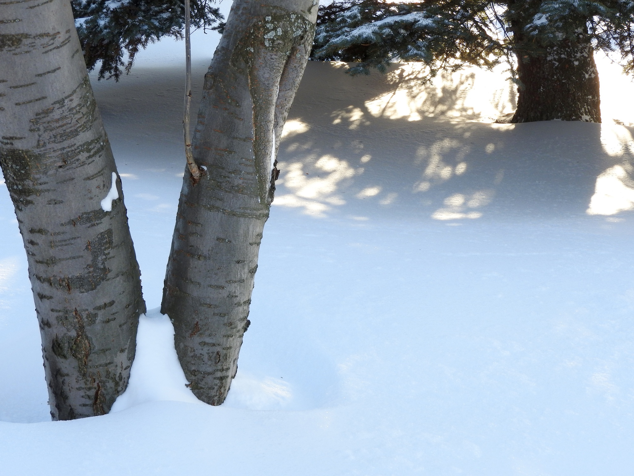 Untouched snow by Lorraine Furmanic