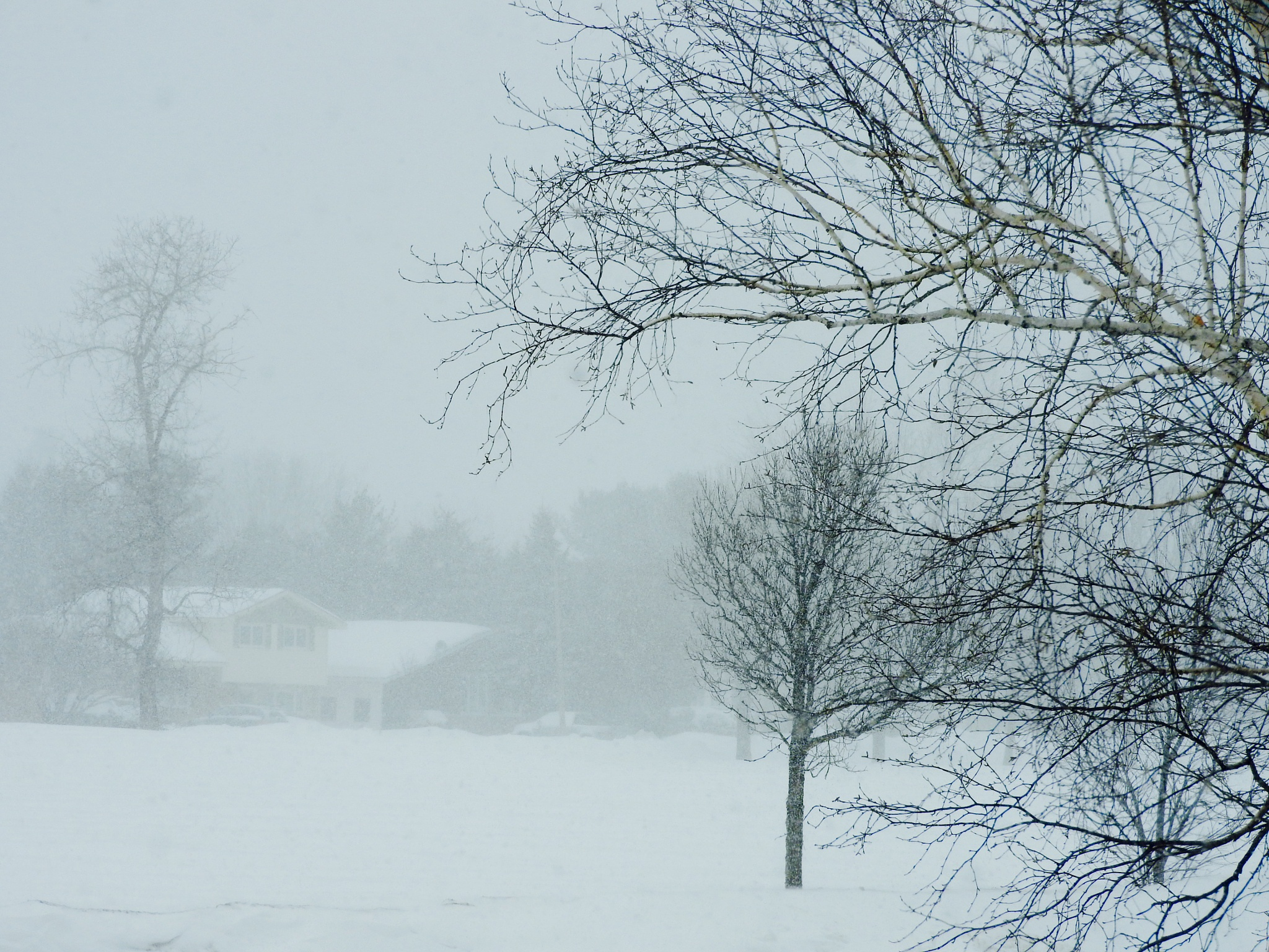Here we go again......Canadian winter...part 3  by Lorraine Furmanic