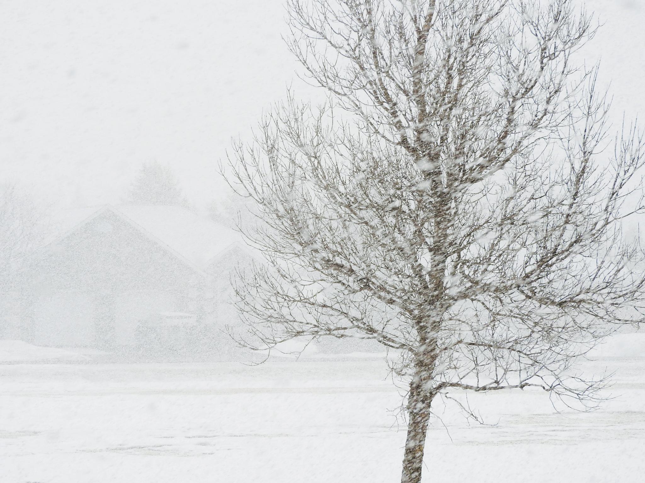 Spring snowstorm  by Lorraine Furmanic