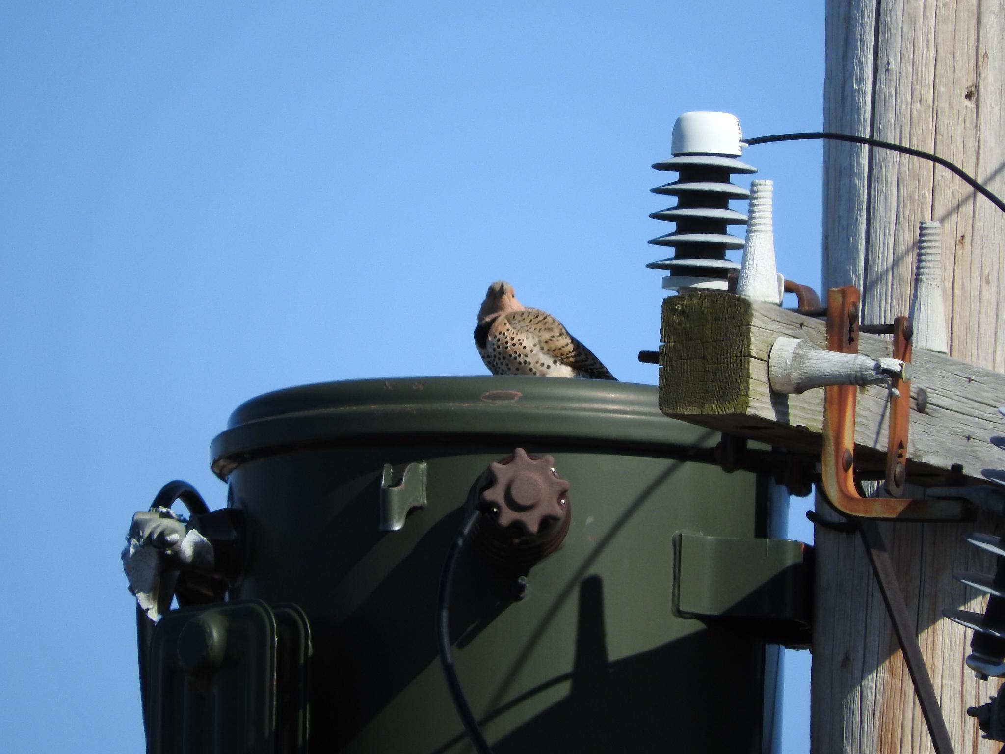 Another neighbourhood watcher :) by Lorraine Furmanic