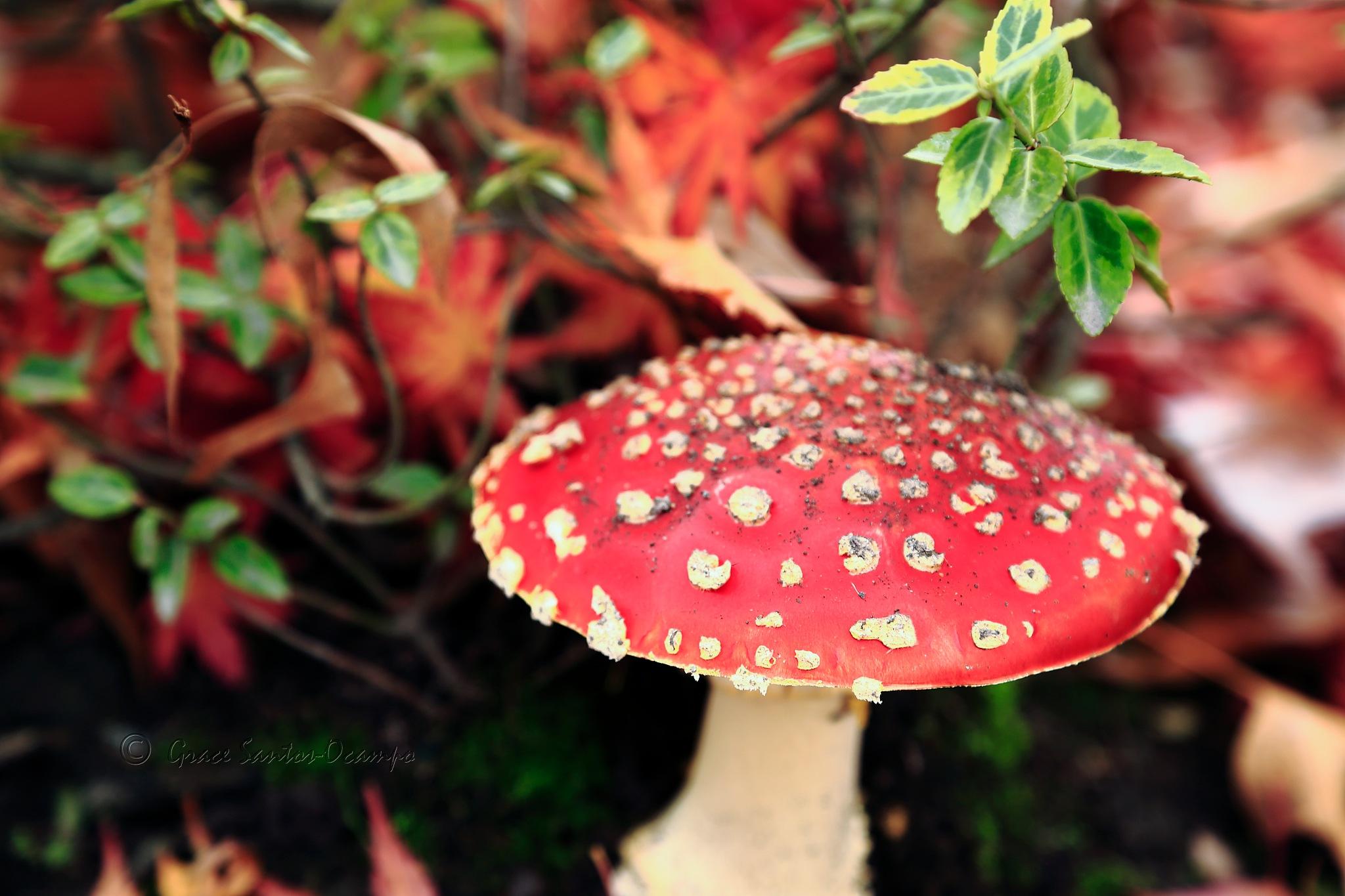 Fairy Tale Mushroom 1 by NightReflections