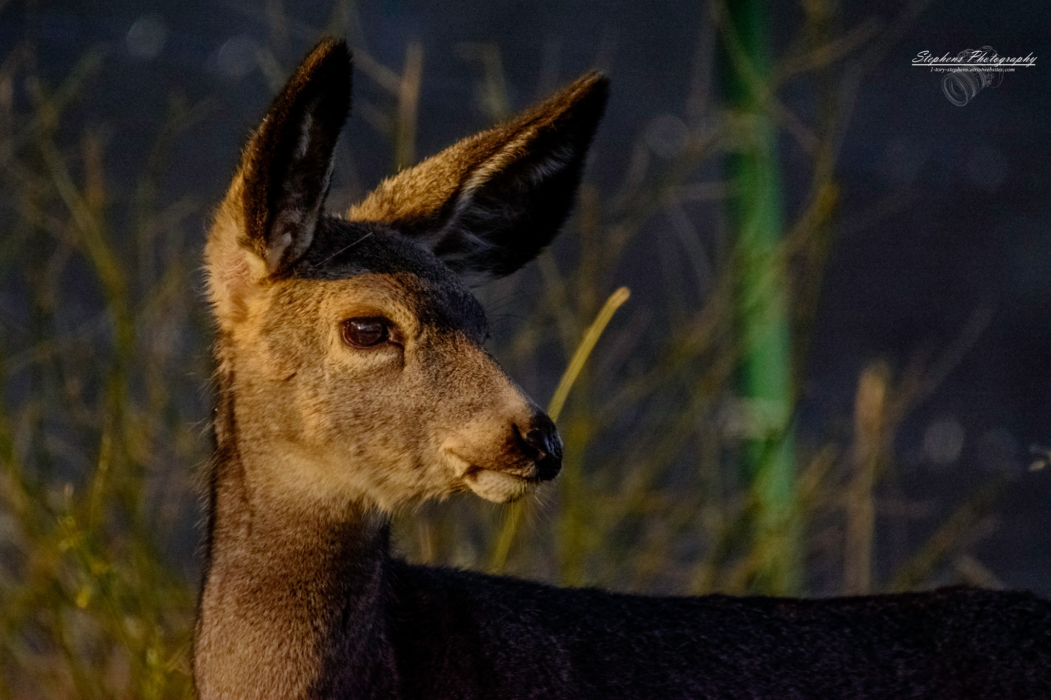 Muley Portrait by Tory L. Stephens
