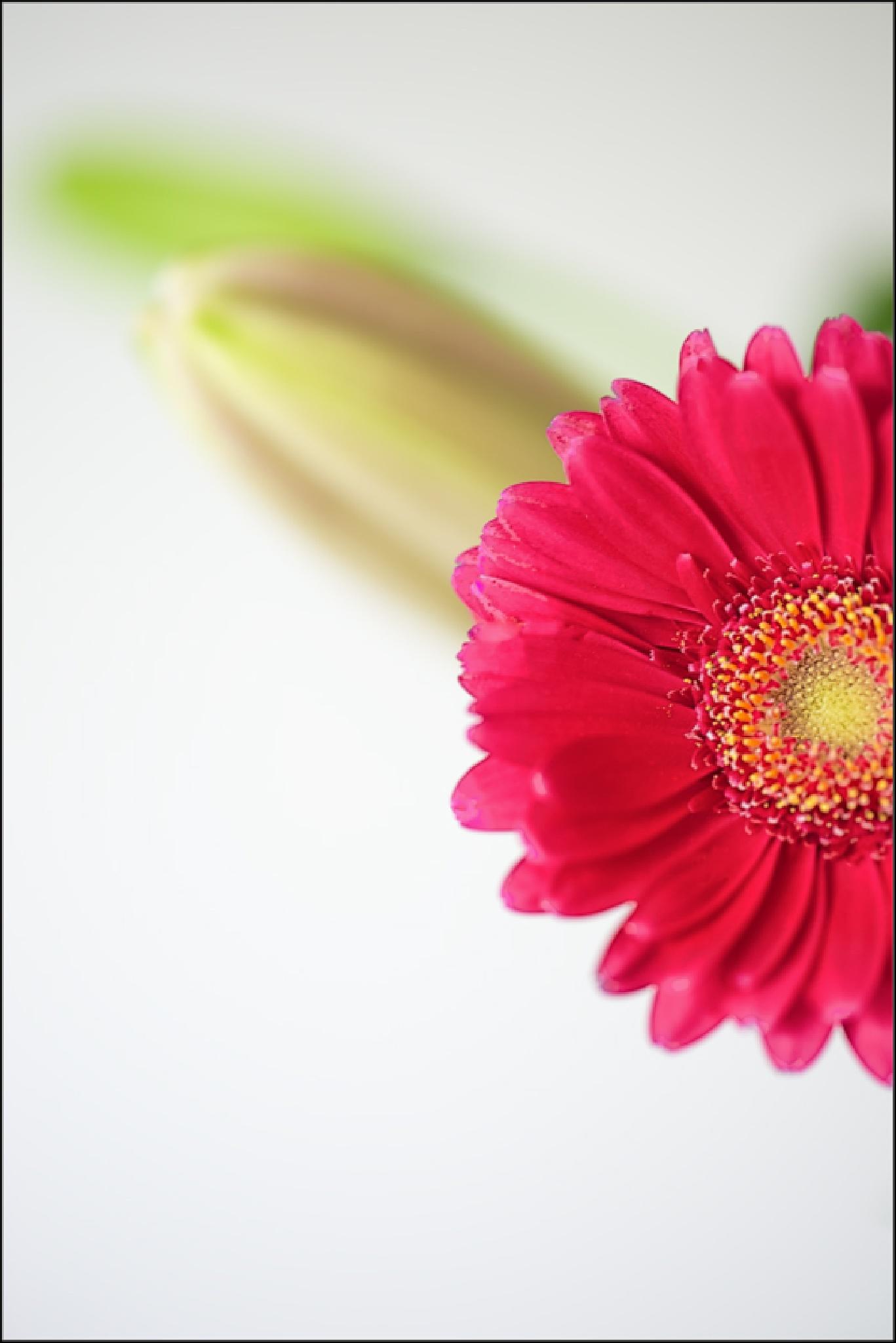 Flower ... by FrankLockwood