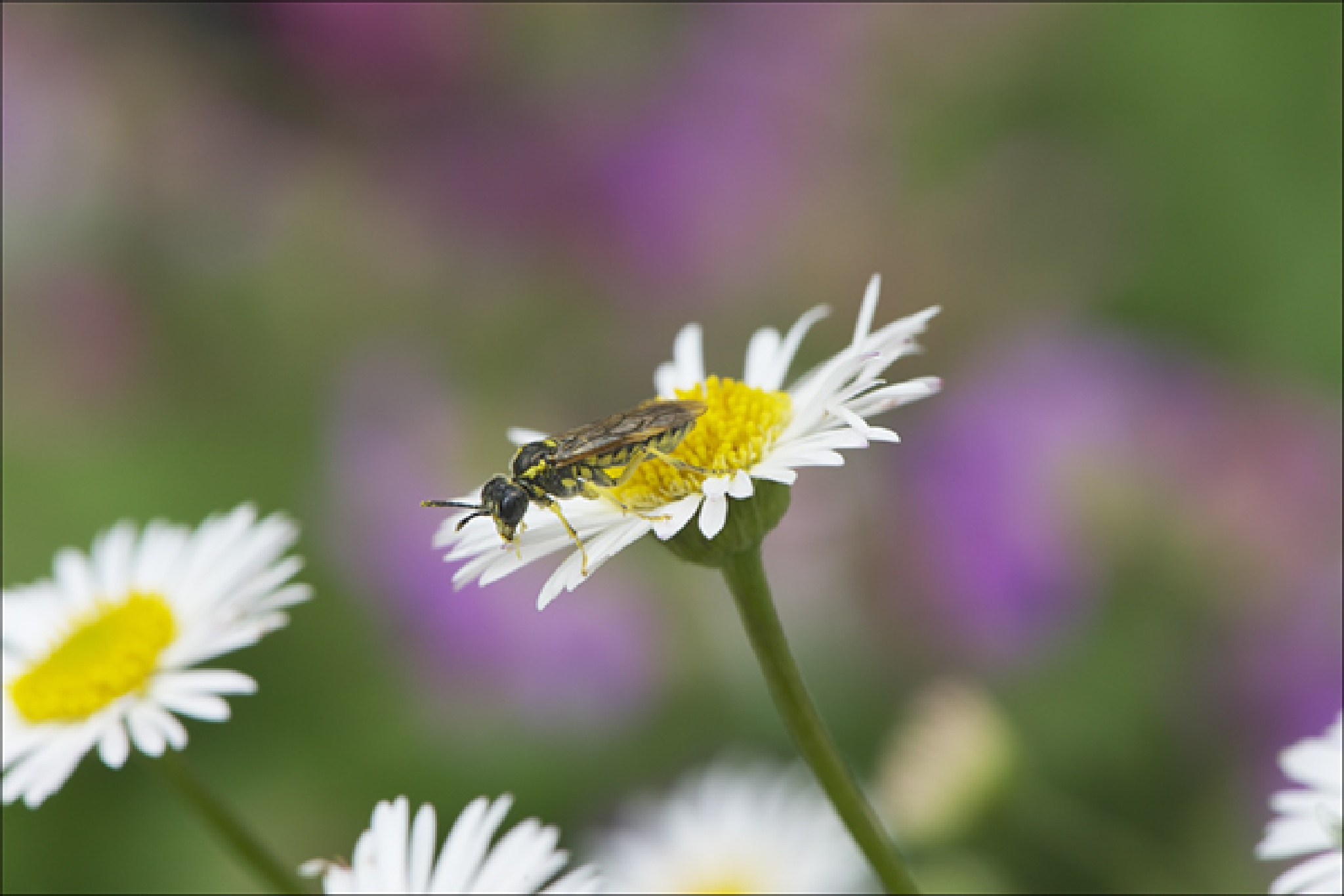 Bug 2 …. by FrankLockwood