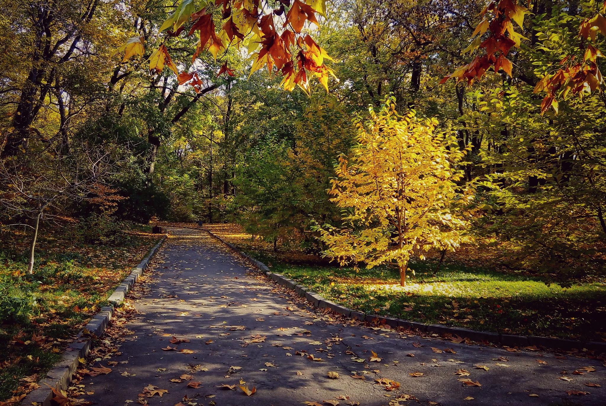 autumn colours by jassaj