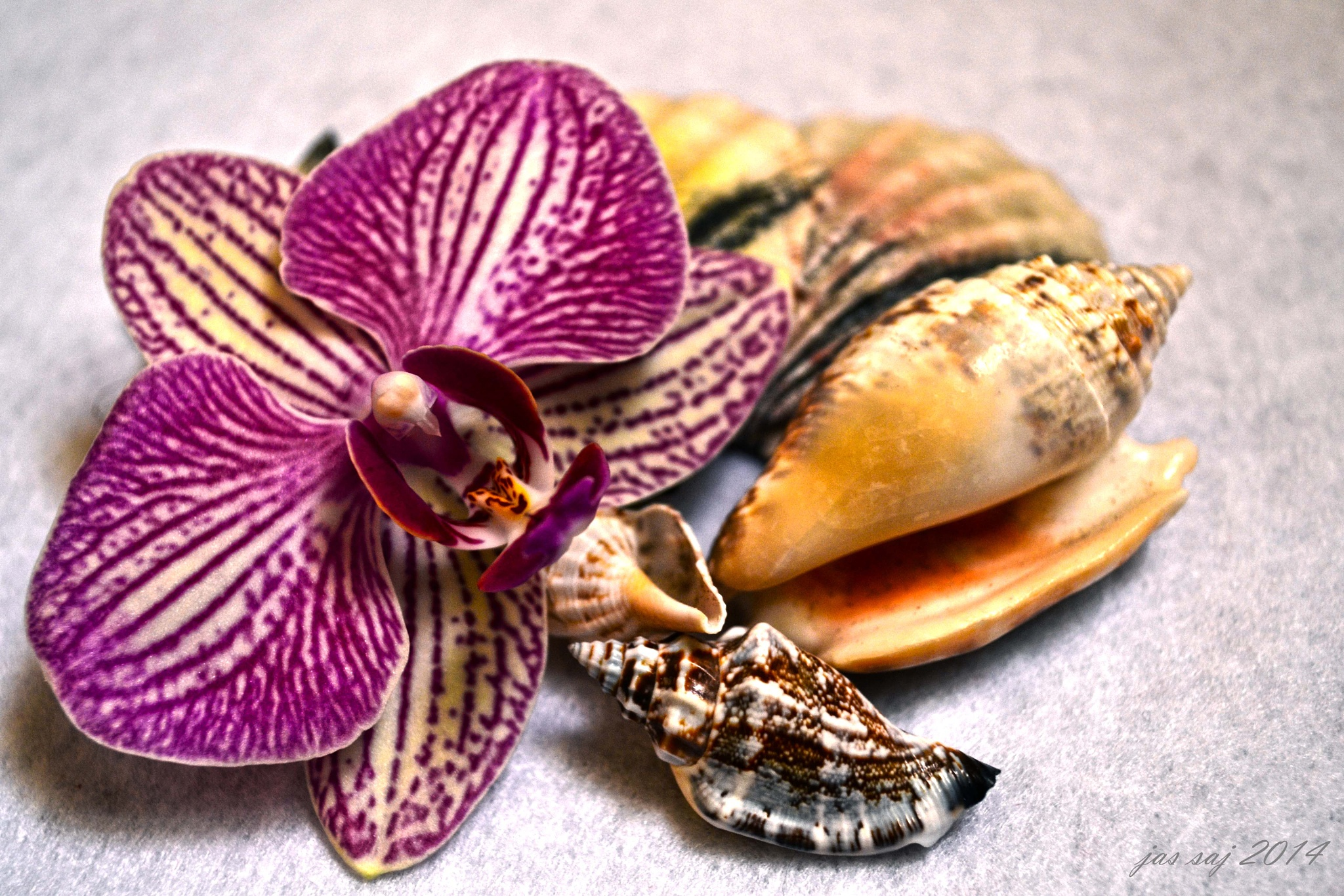 Orchid and shells by jassaj