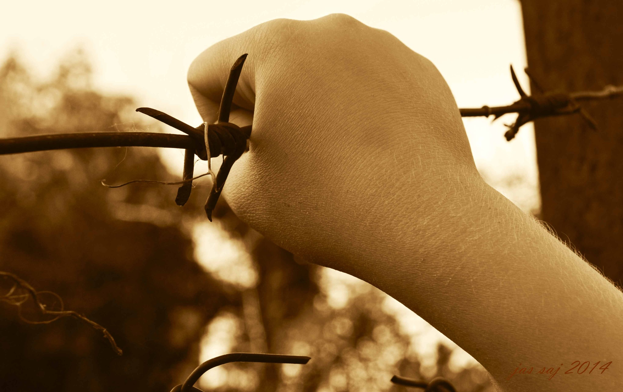 Photo in Abstract #barbed wire #hand #sepia