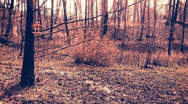 in the woods by jassaj