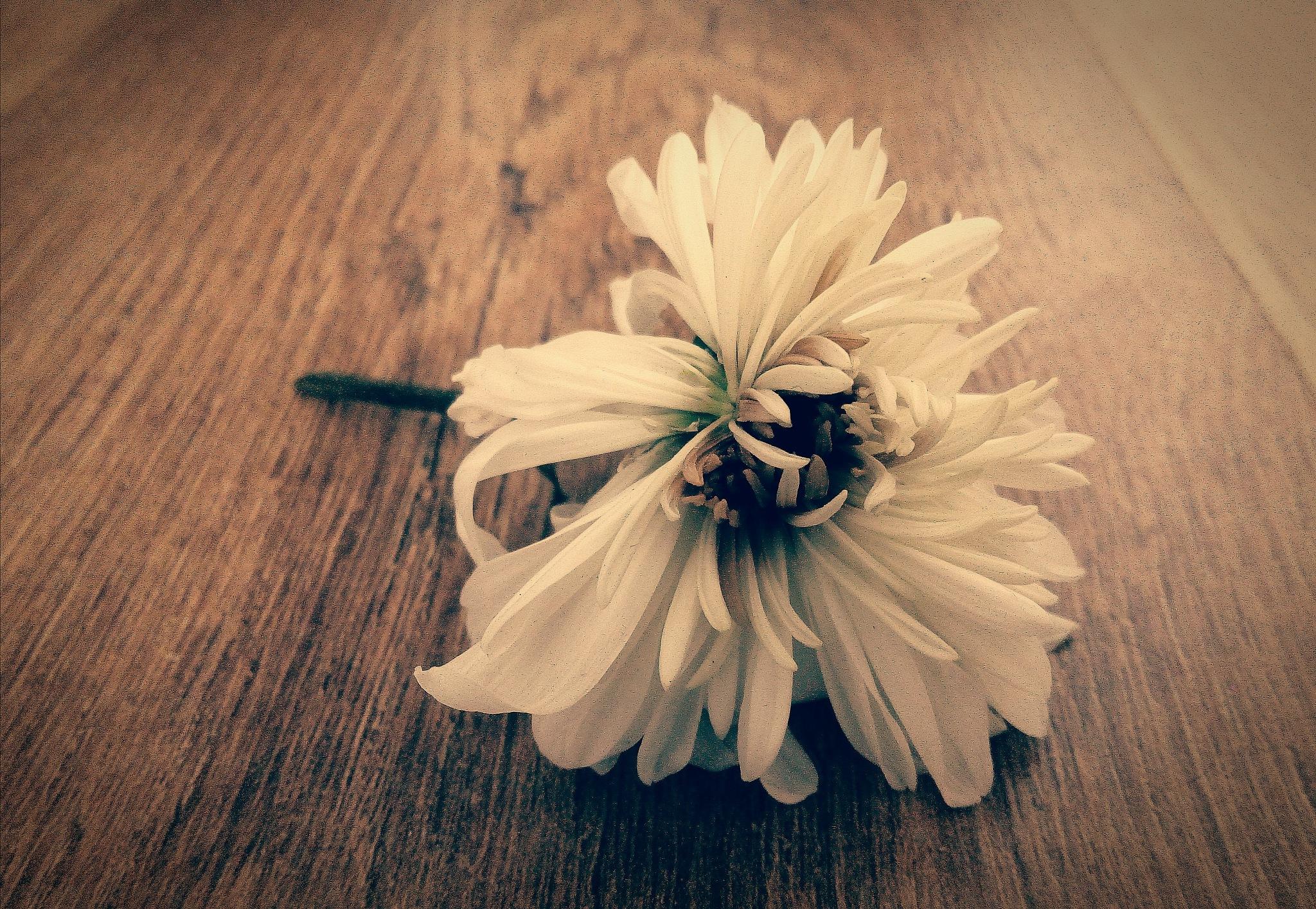 life fading away by jassaj