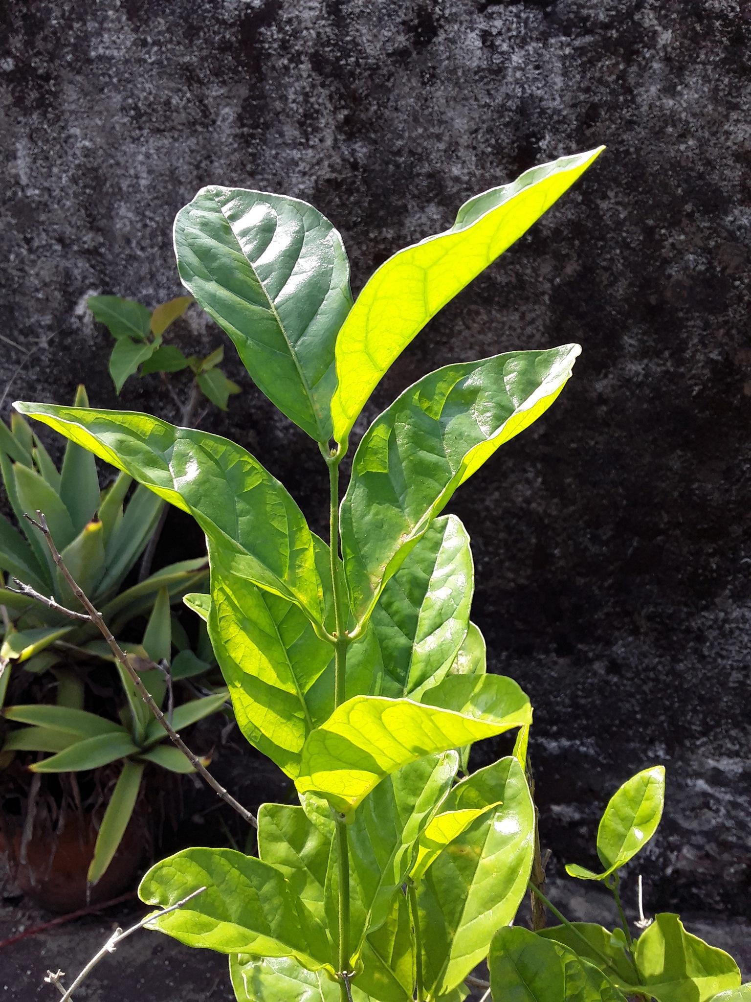 Green tree by mallickda2345678