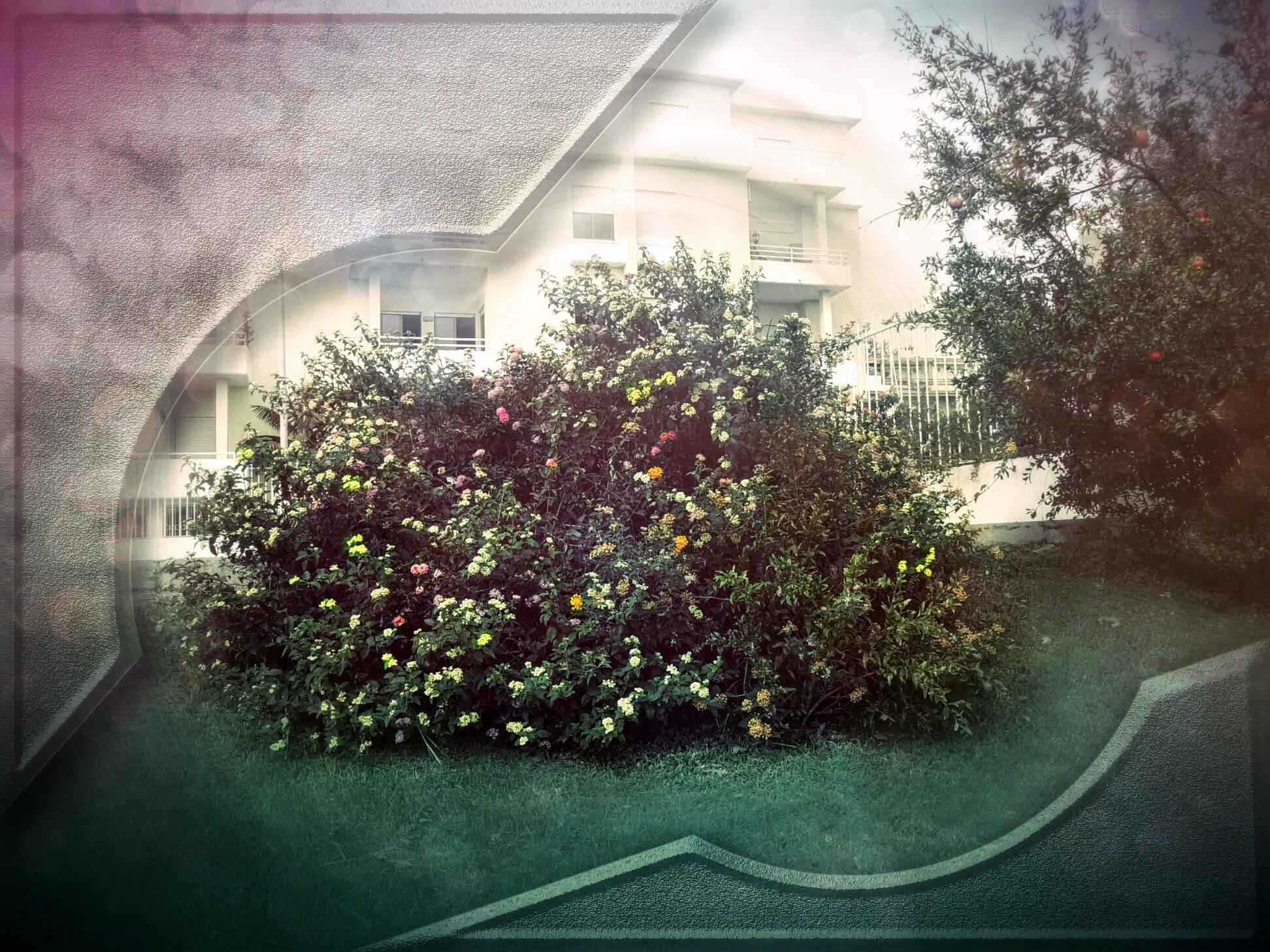 Garden,flowers by Bruno Miguel Sousa (Pr0m4xine)