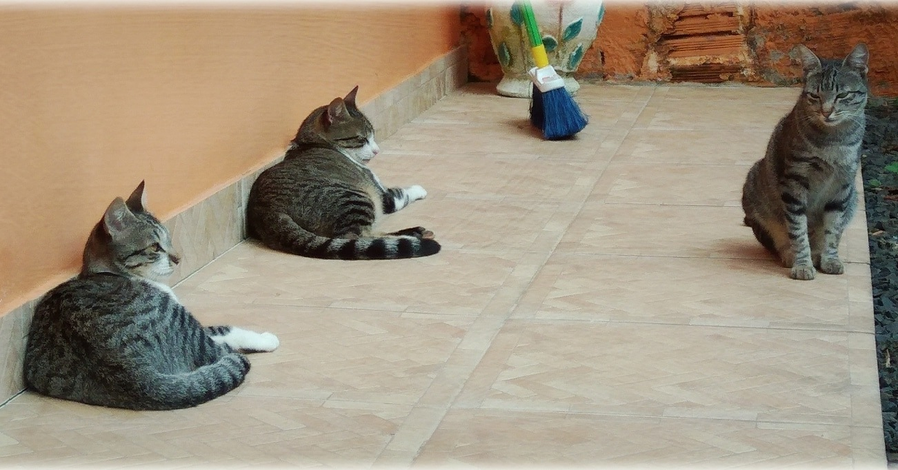 my cats by Douglas G. Oechsler