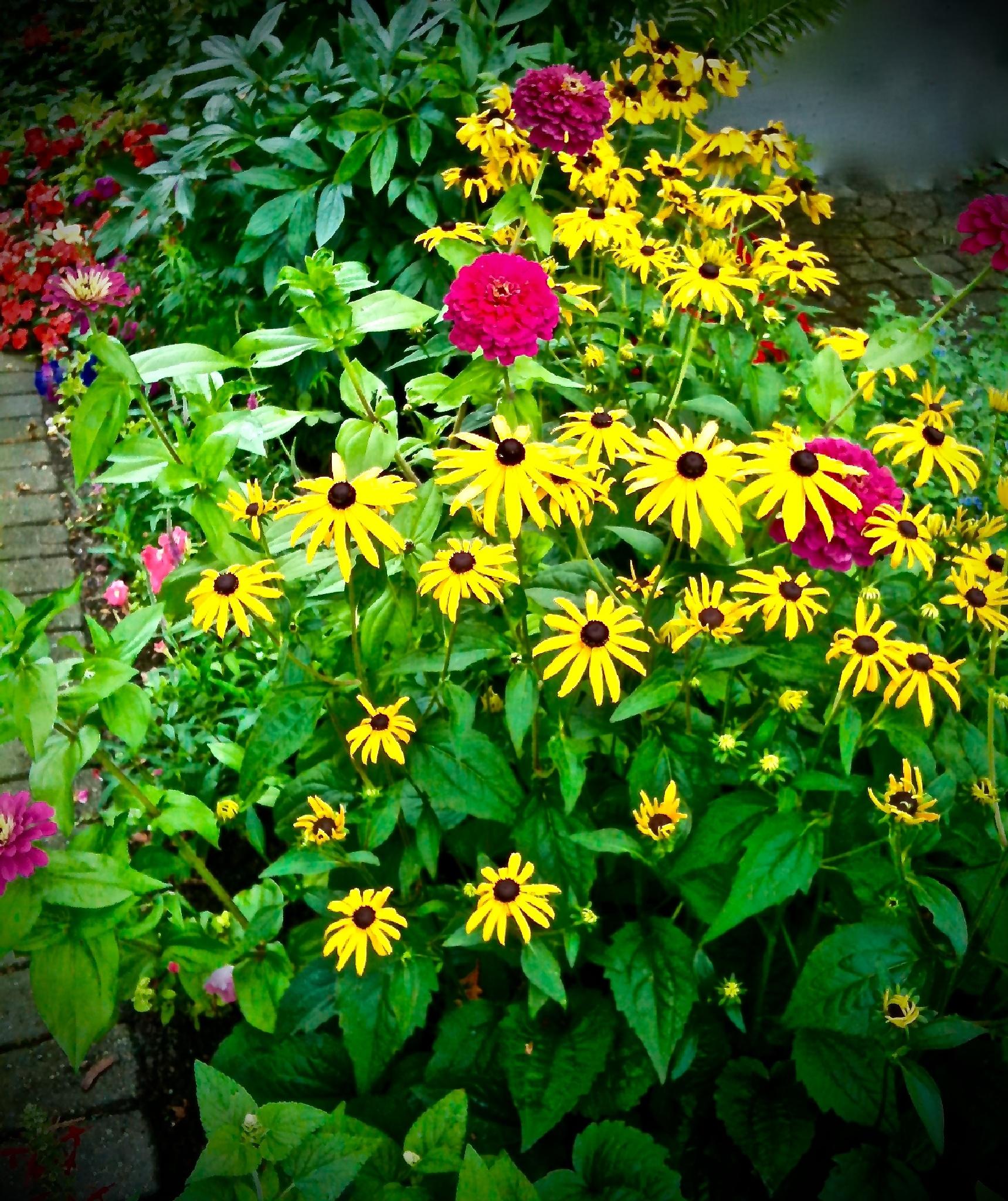 Summer Garden by Laurie Ann Morche'