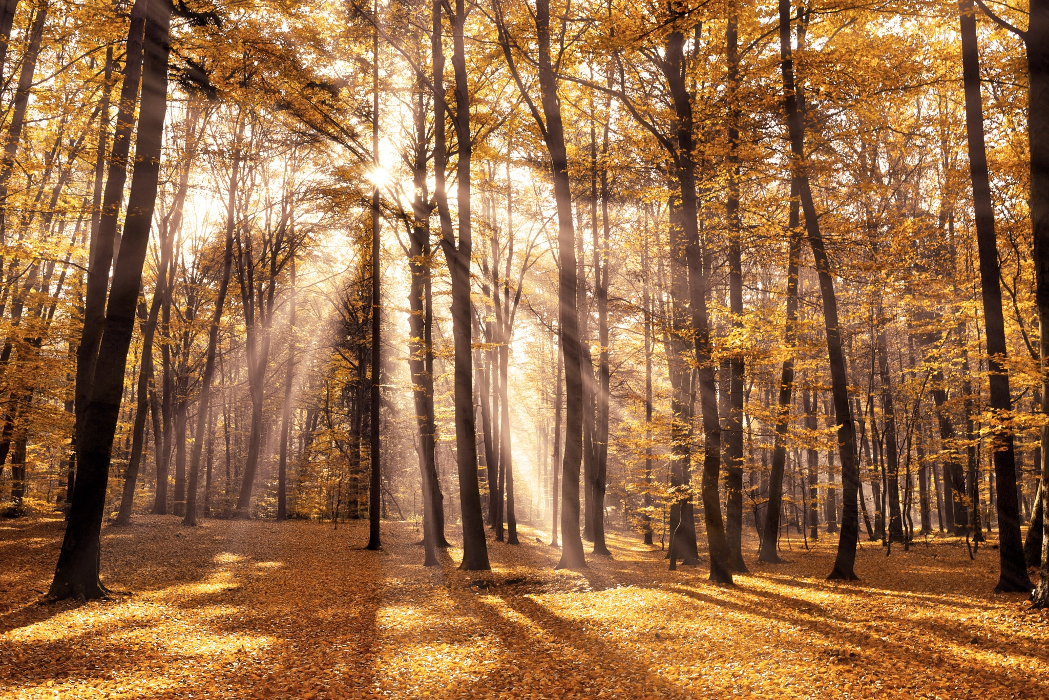 Nature light. by jasdav