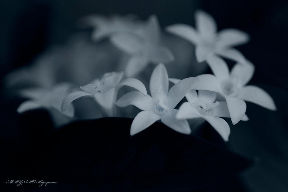 1027 by MAYAKO  Kajiyama