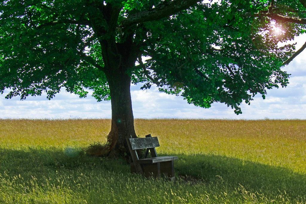 one tree hill by dirtyharriet