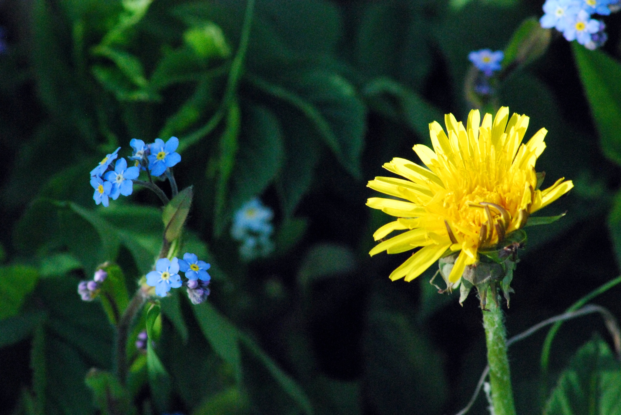 Flowers by Sandra Meister