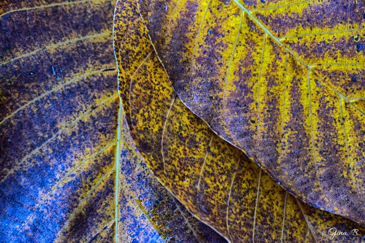 Autumn Textures by Gi Na