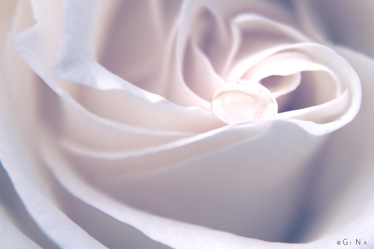 Rose's Tear by Gi Na