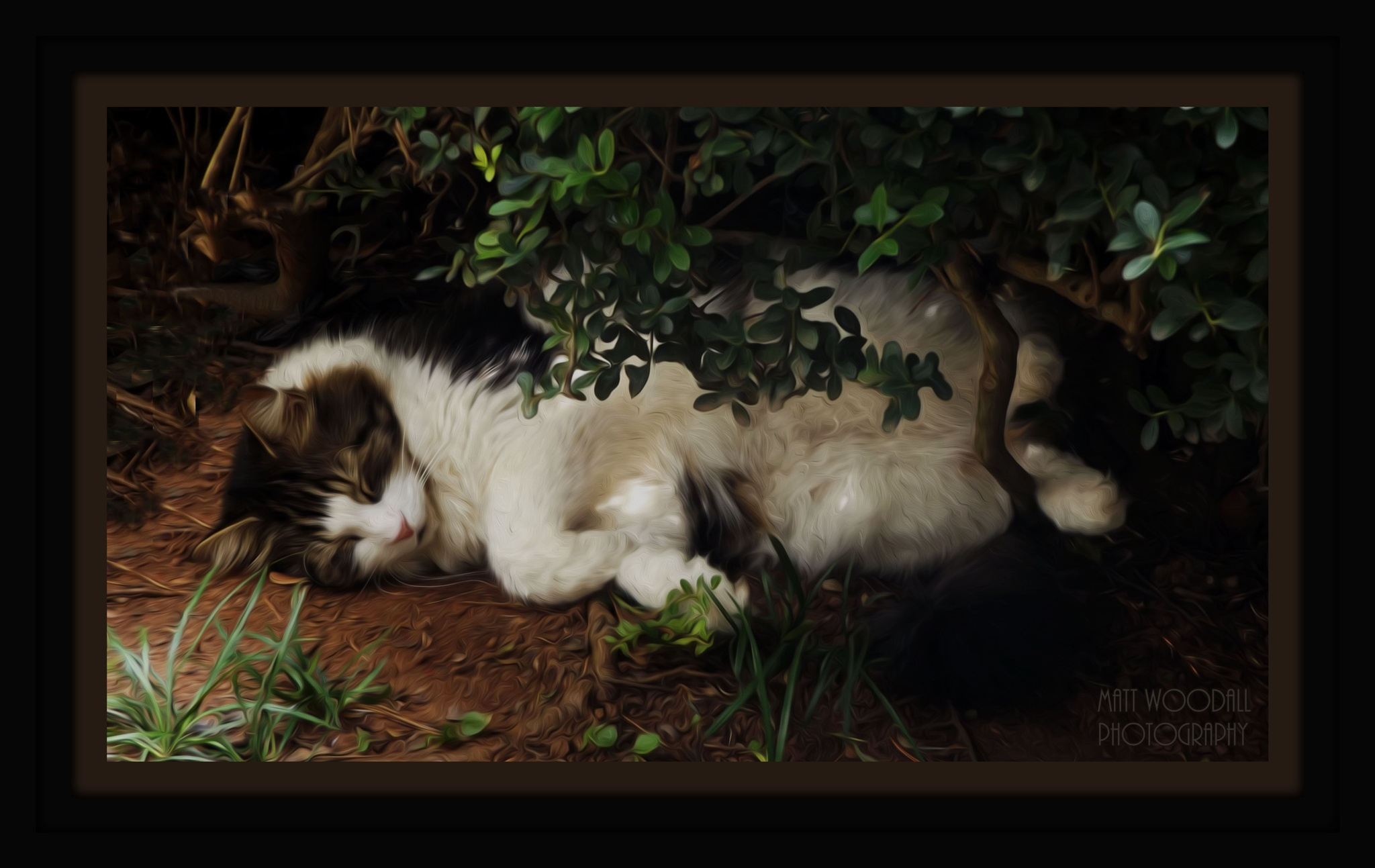 Tom catnapping by Matthew Woodall