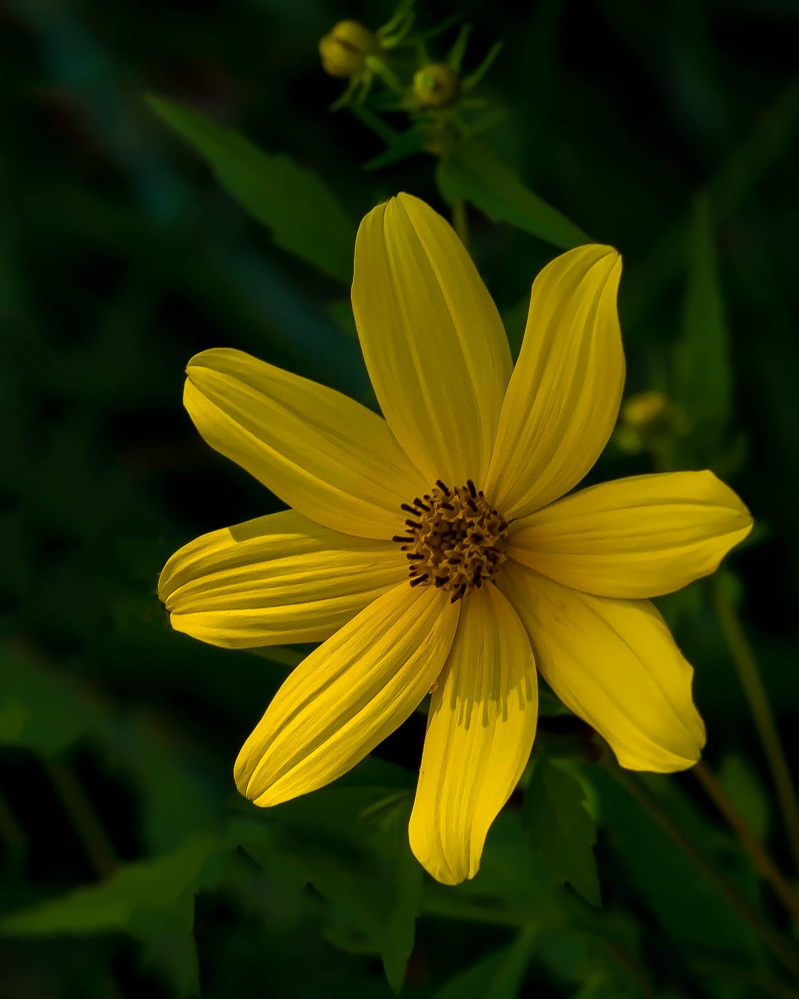 Wildflower On A Summer Day by Edward Brown