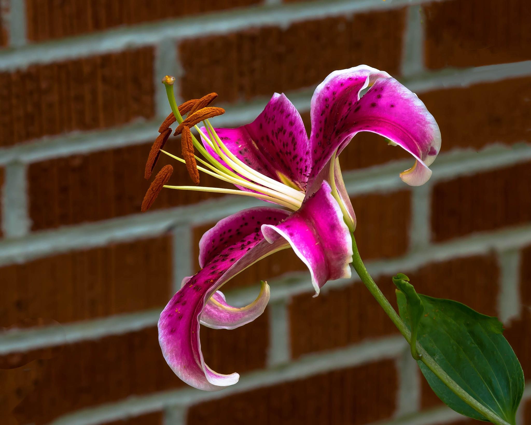 Ornamental Lilies by Edward Brown