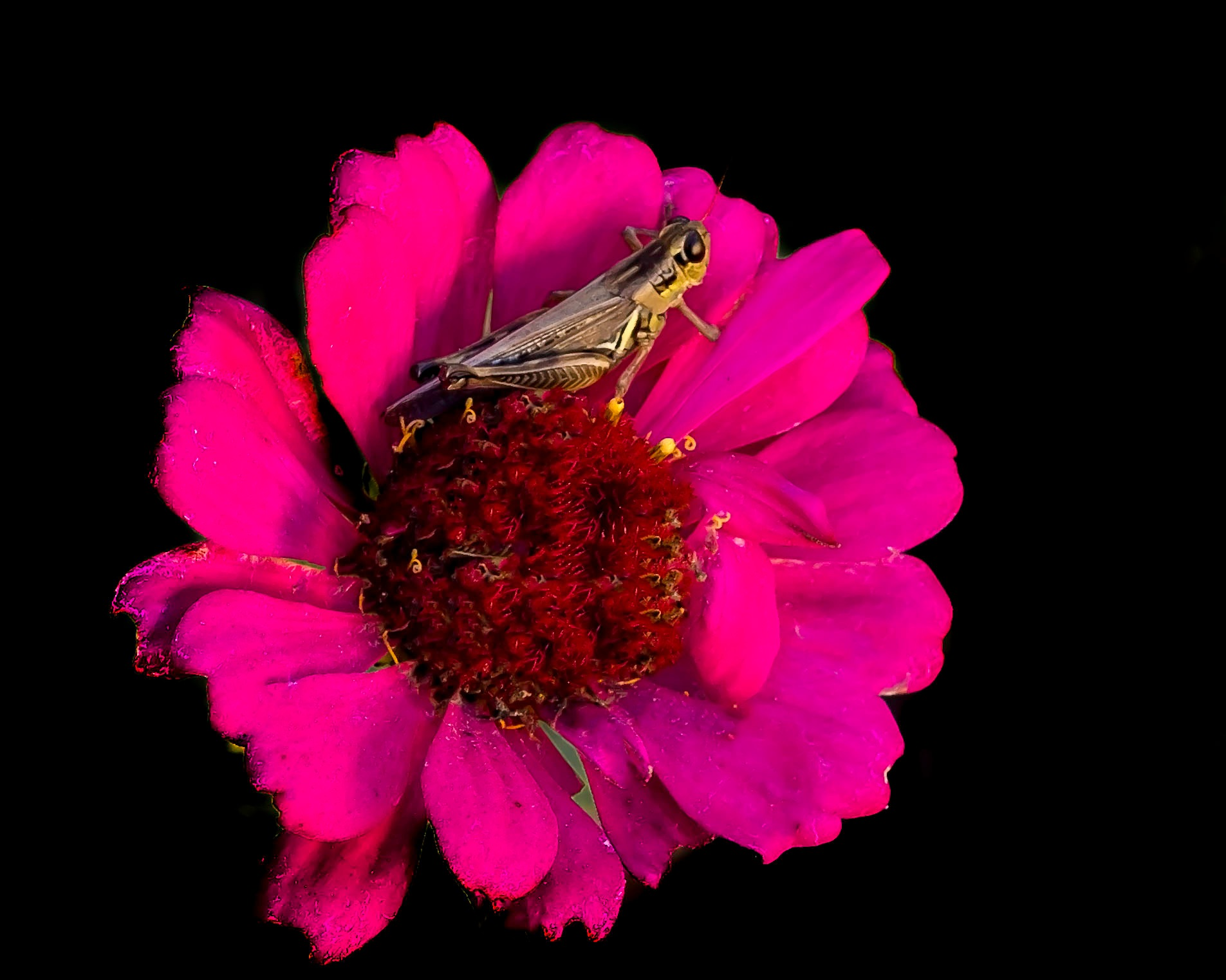 Weedhopper Autumn Blossom by Edward Brown