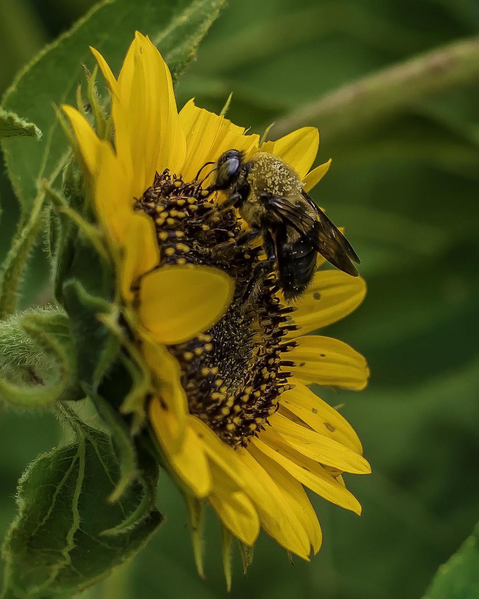 Summer Harvest Honey Bee by Edward Brown