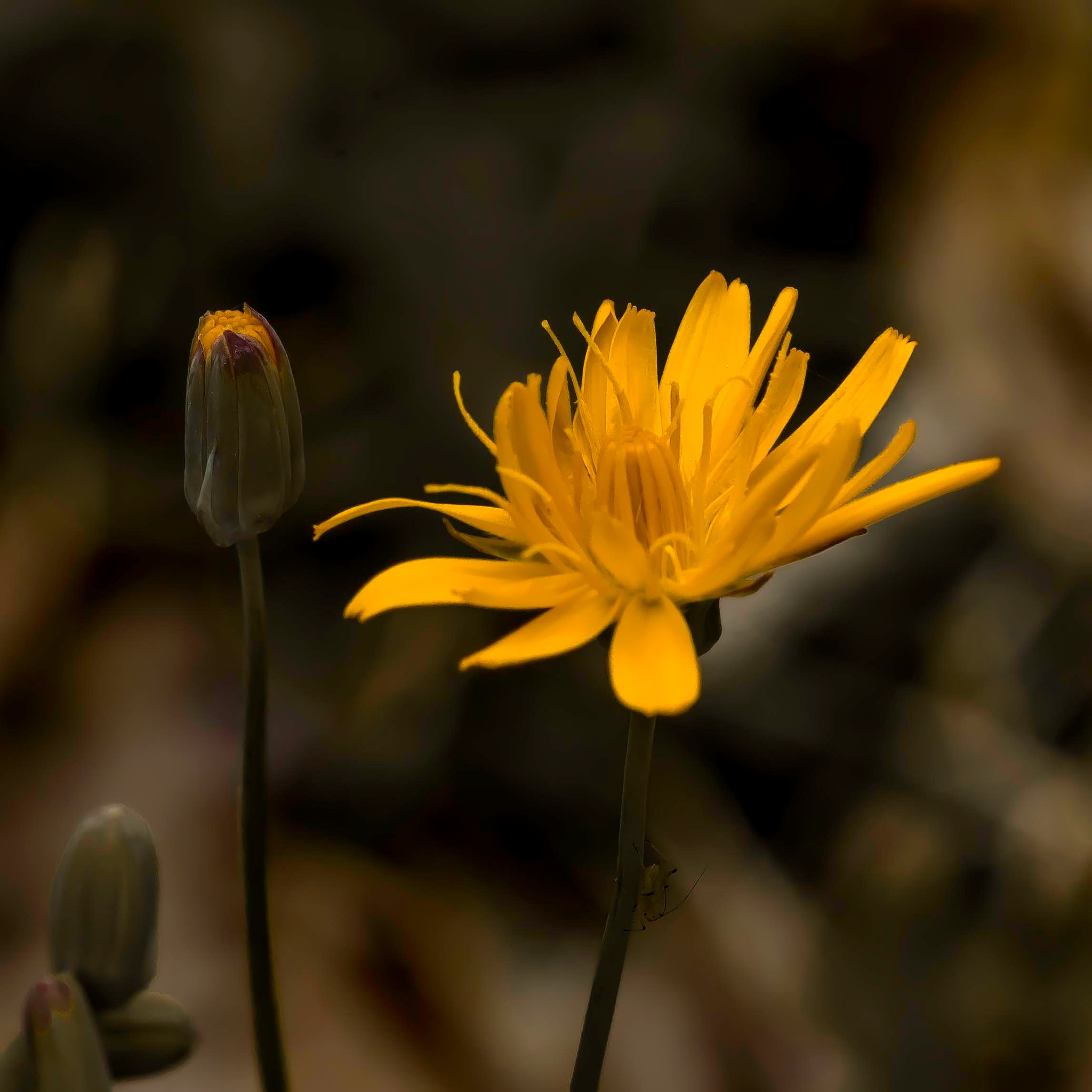 Wildflower In Golden Light by Edward Brown