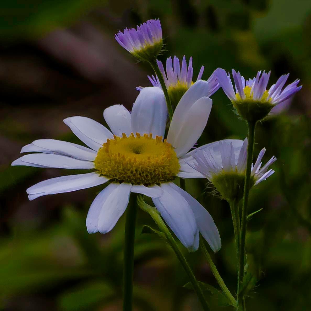 Wildflowers As Daylight Ebbs by Edward Brown