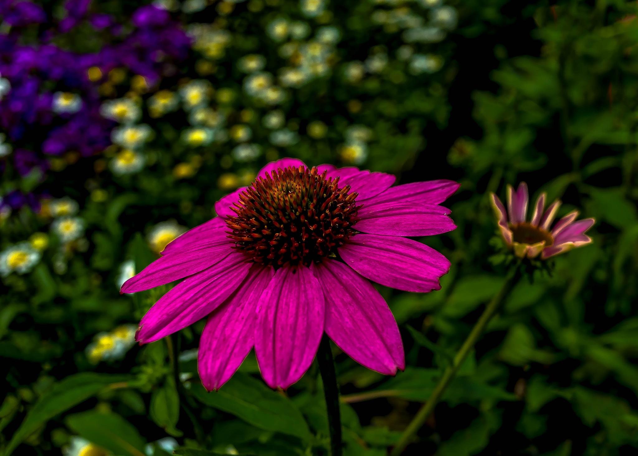 Afternoon Garden by Edward Brown