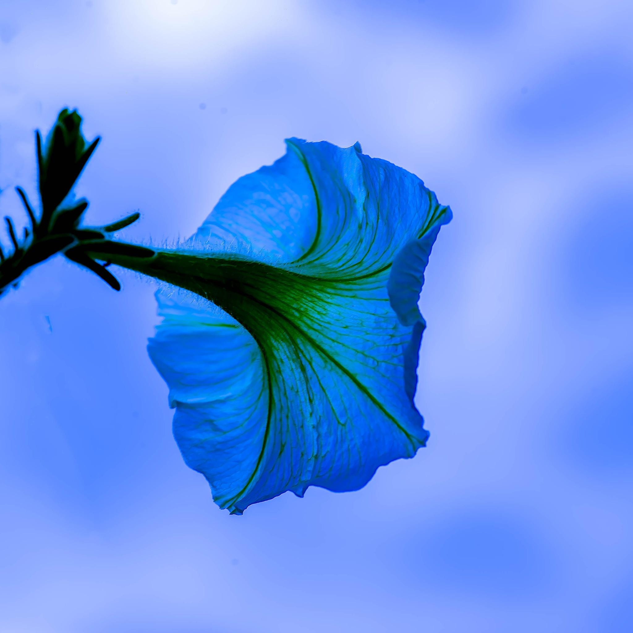 Blue Sky Blue by Edward Brown