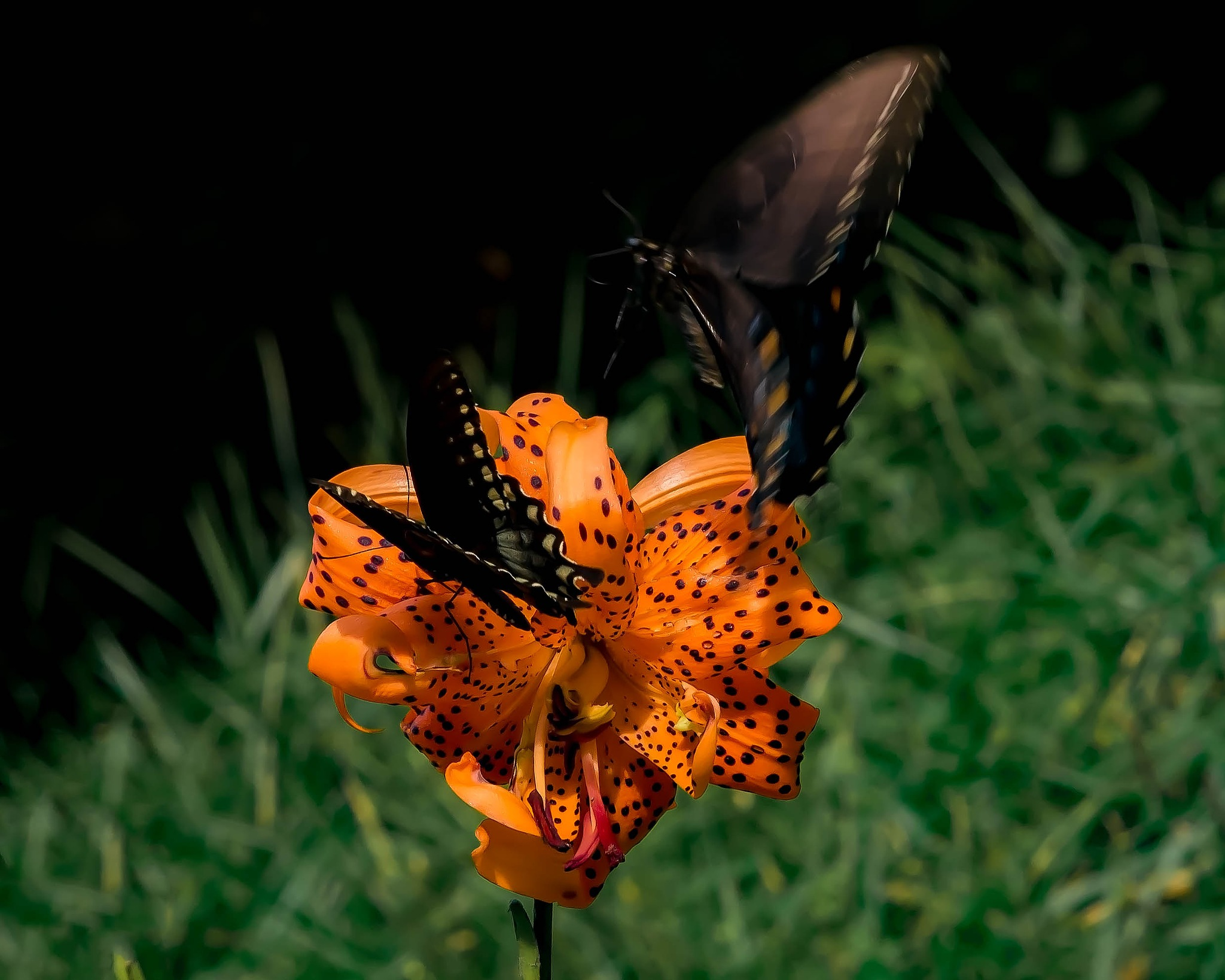 Gathering Swallowtails by Edward Brown