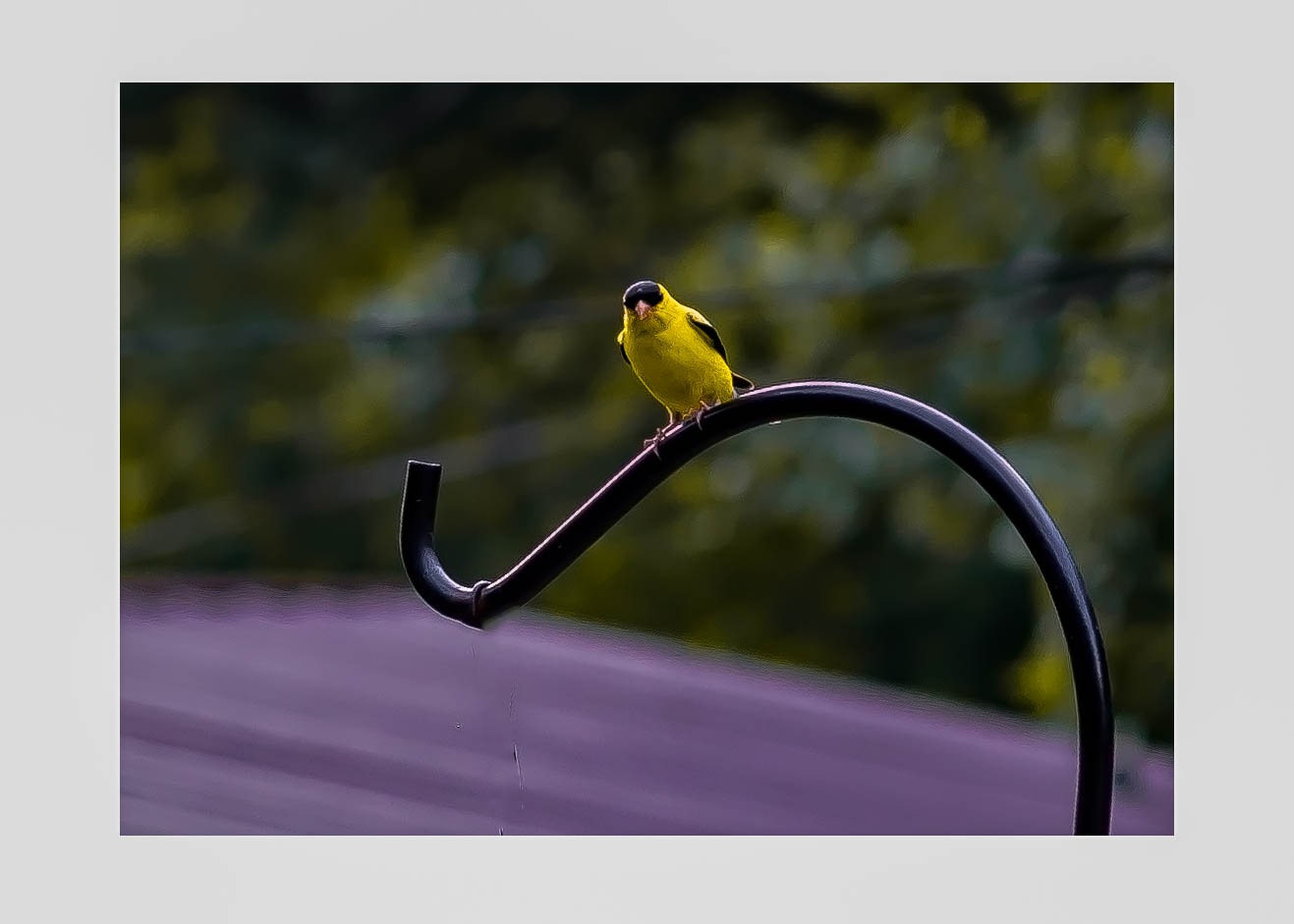 Yellow Bird by Edward Brown
