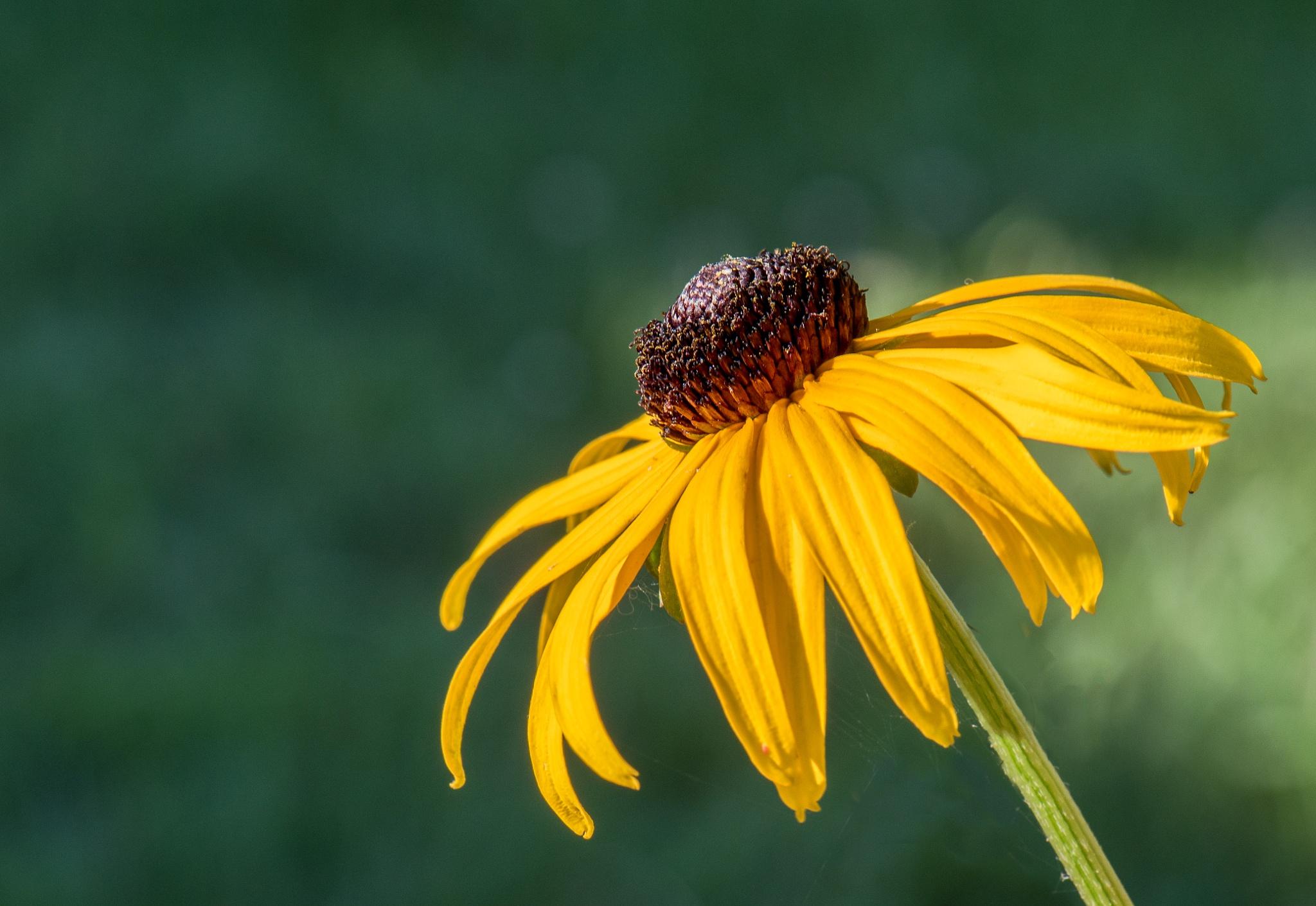 Sunny by Tina Clark