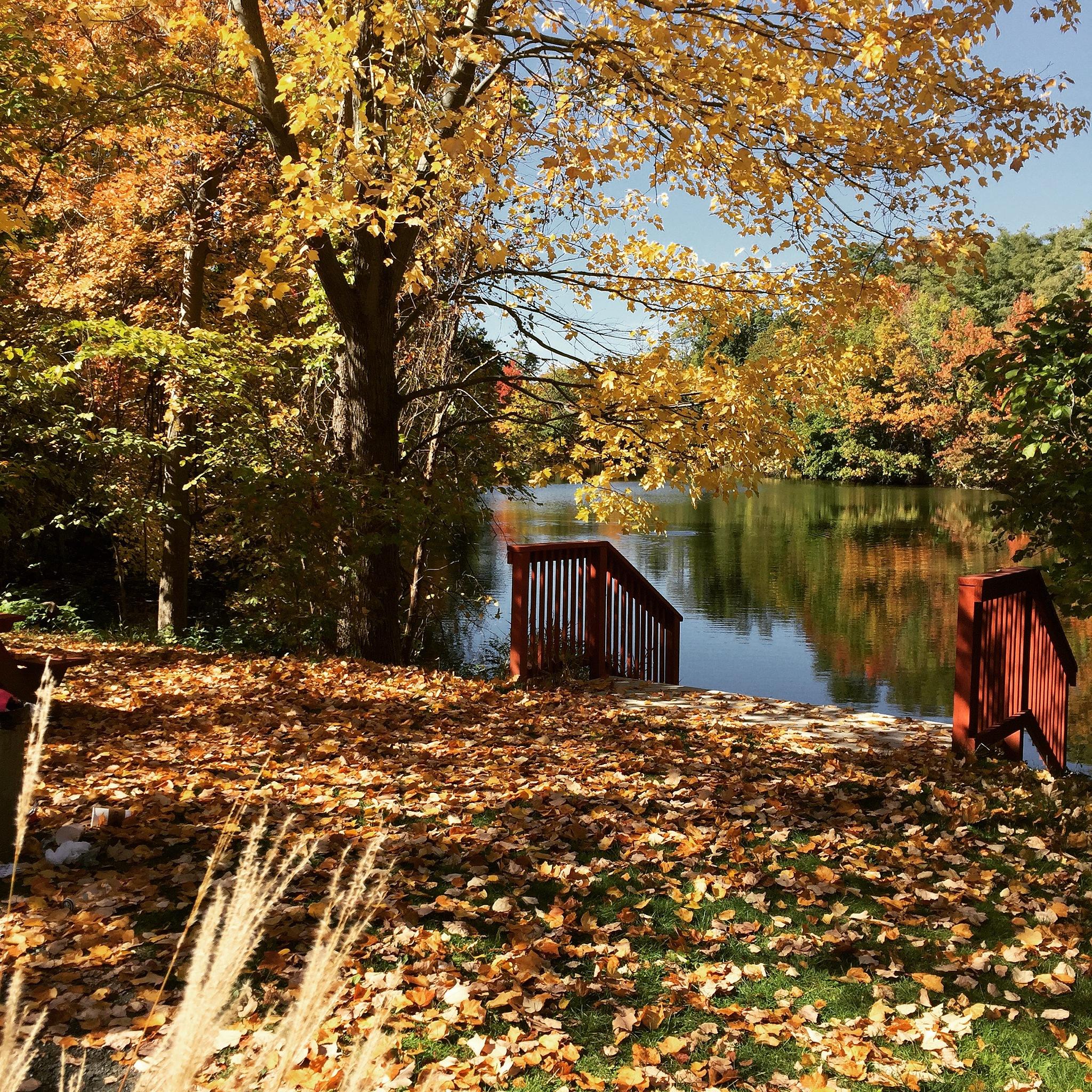 Autumn Splendor by Ilovecats7