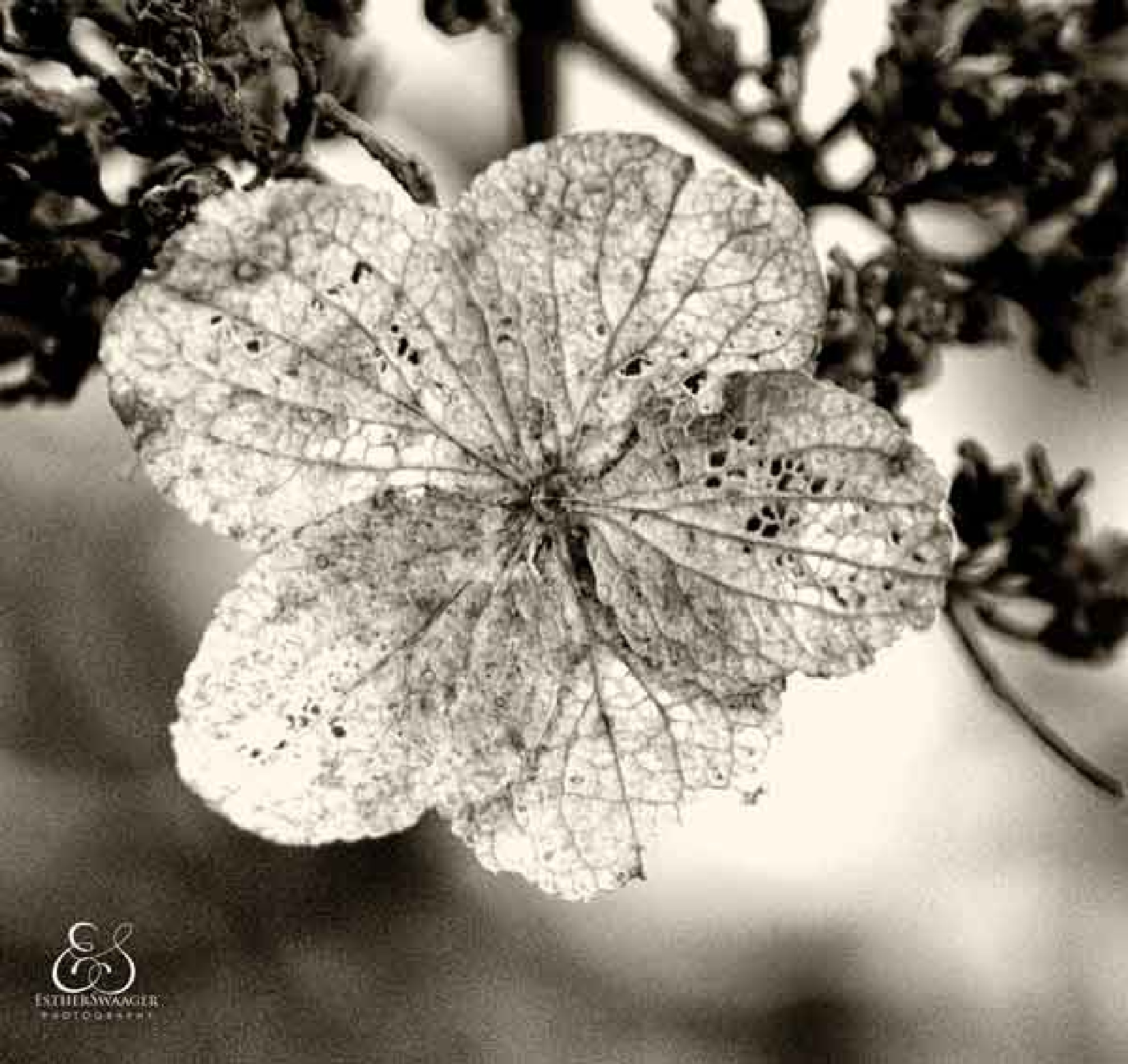 faded glory by Esther Swaager Es Photography