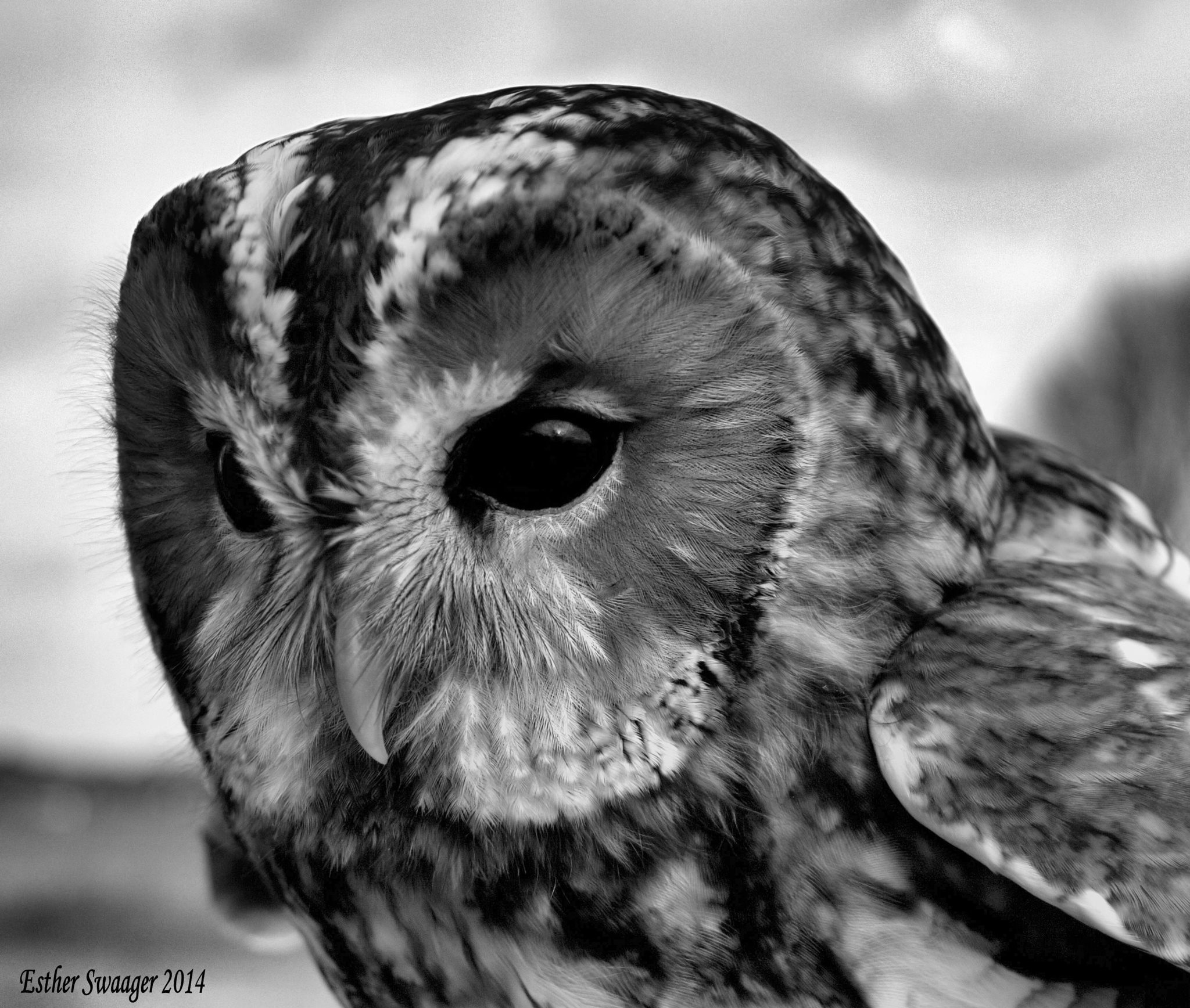 owl by Esther Swaager Es Photography