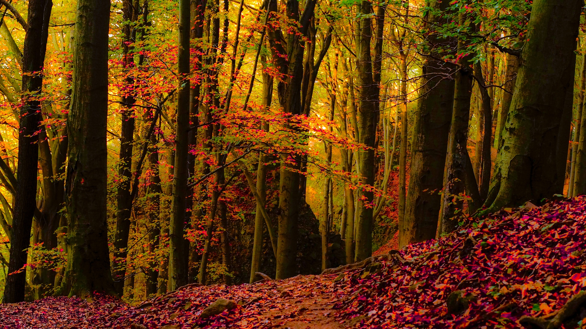 Autumn Forest by Tamas Filep