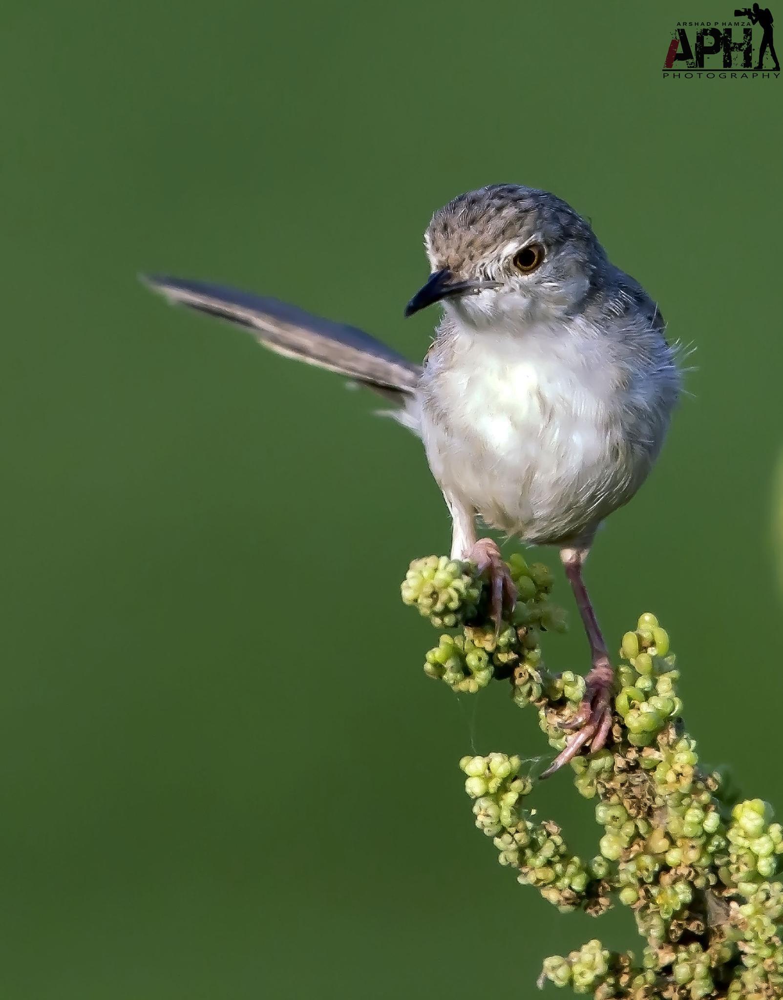Small bird by arshadphamza