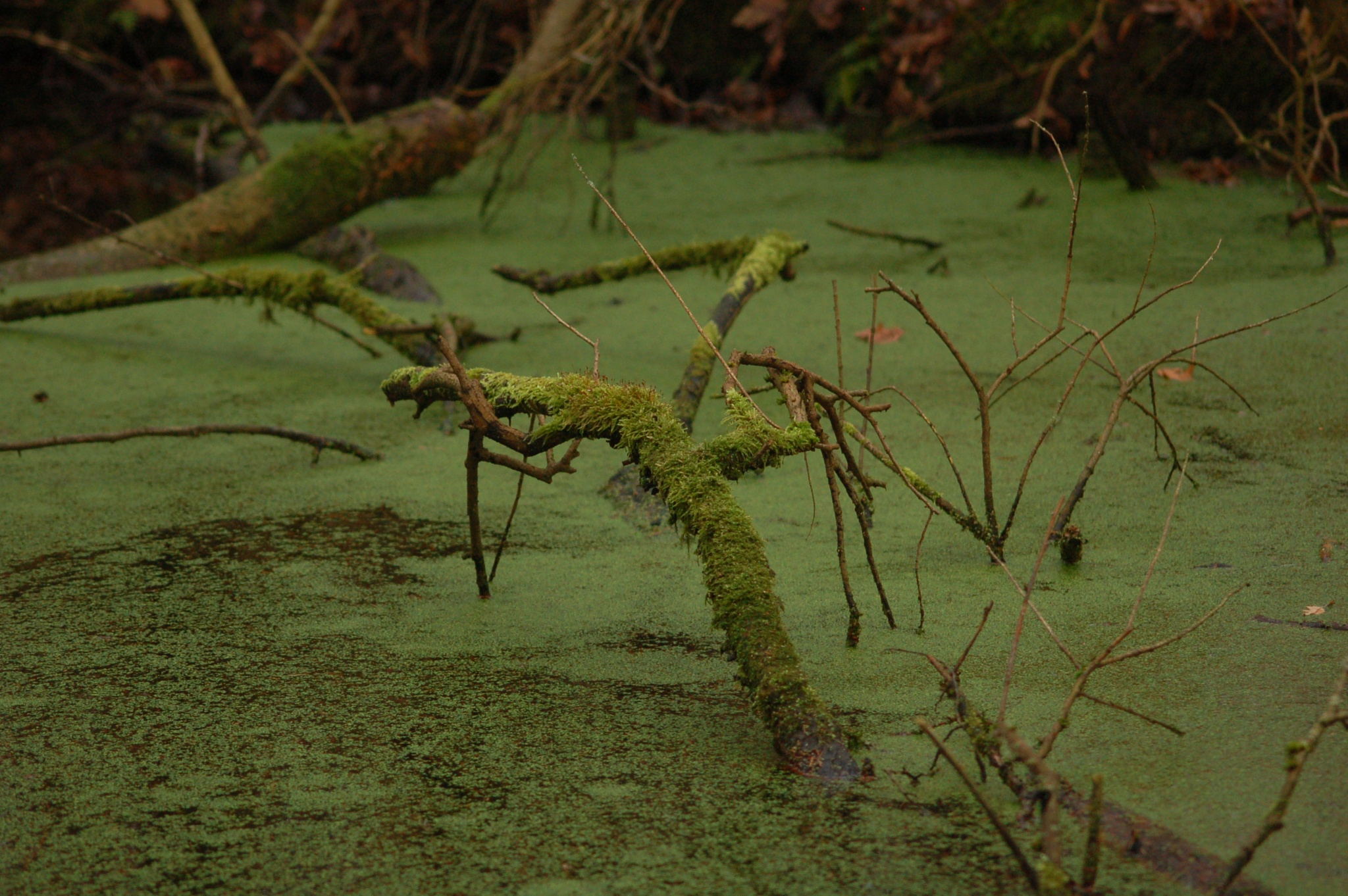 the swamp by vanetty