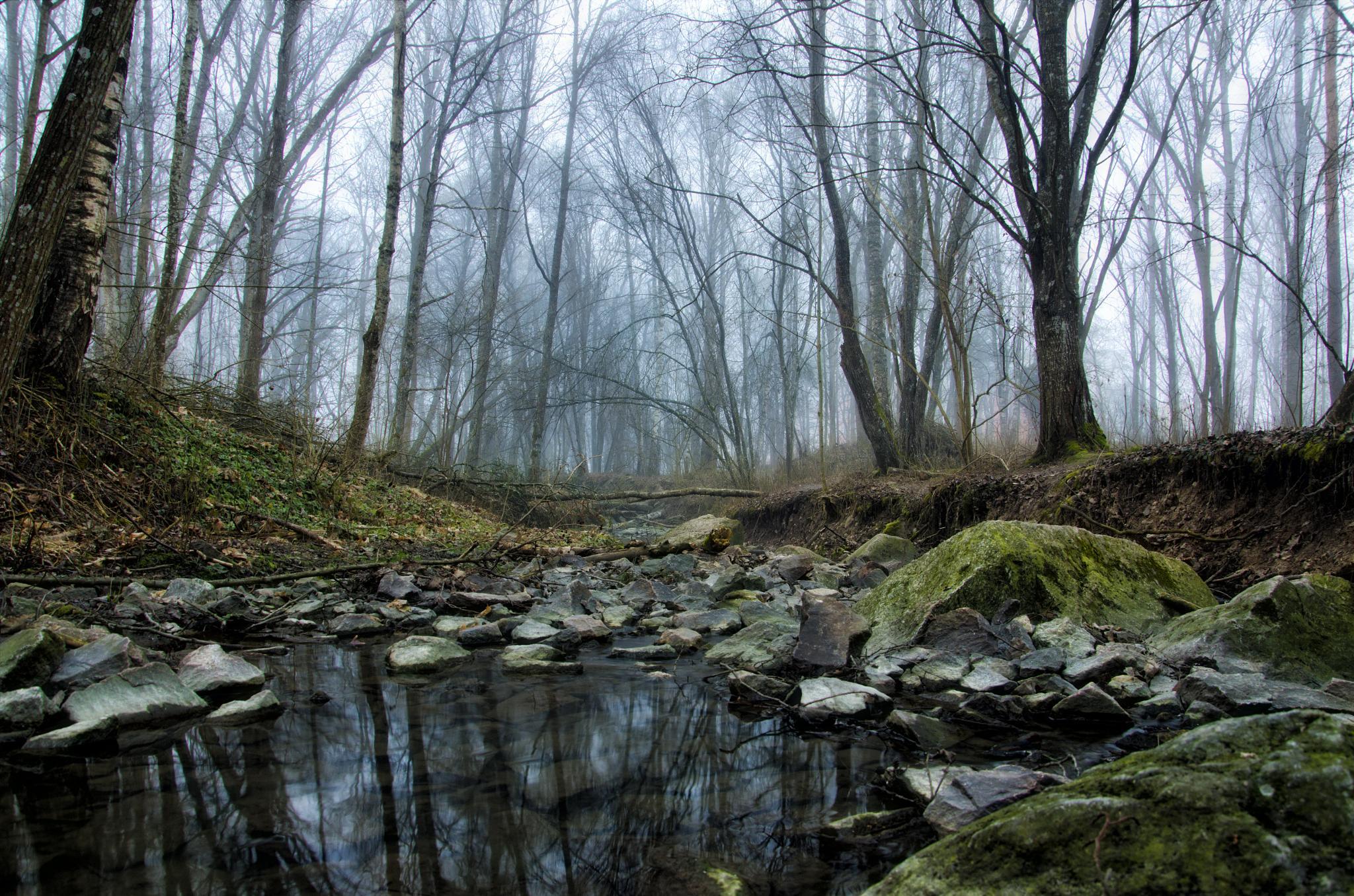 In the misty forest by Alexander Arntsen