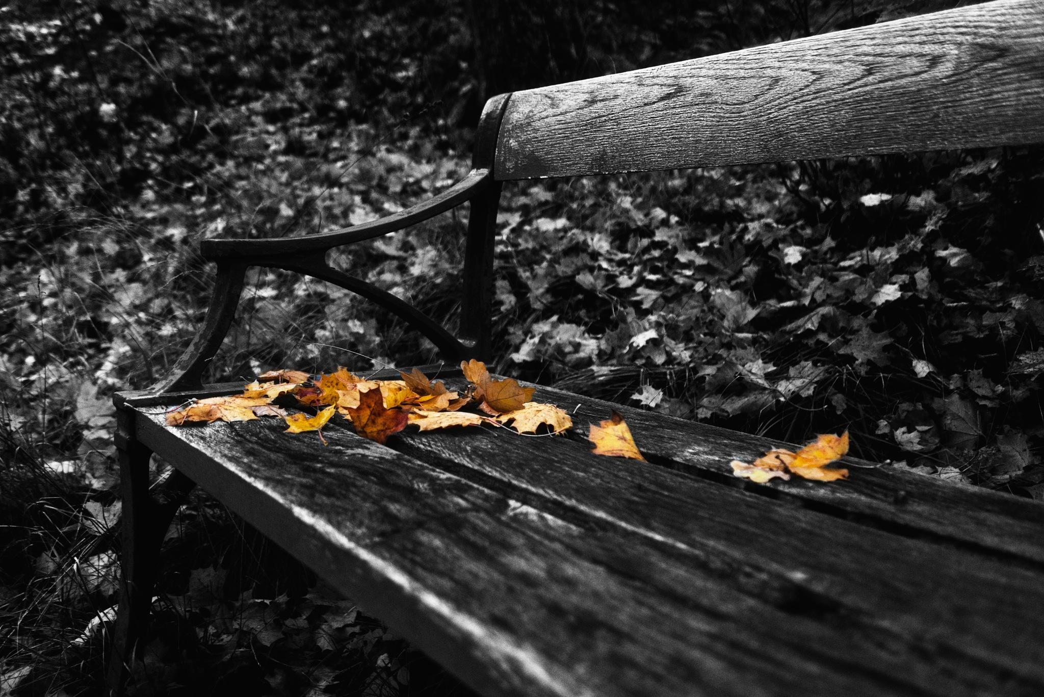 Autumn feelings... by Alexander Arntsen