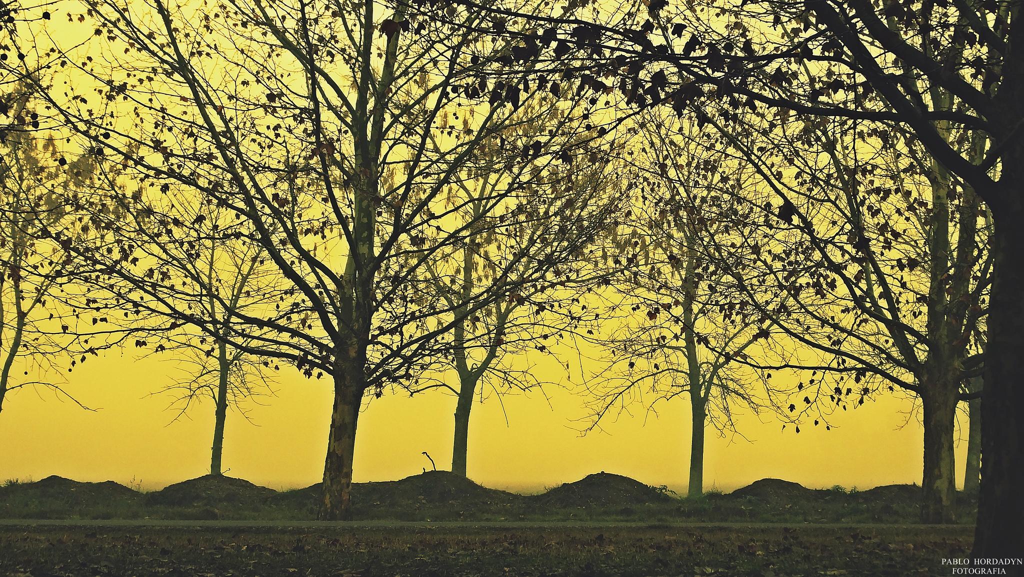 Untitled by Pablo Hordadyn