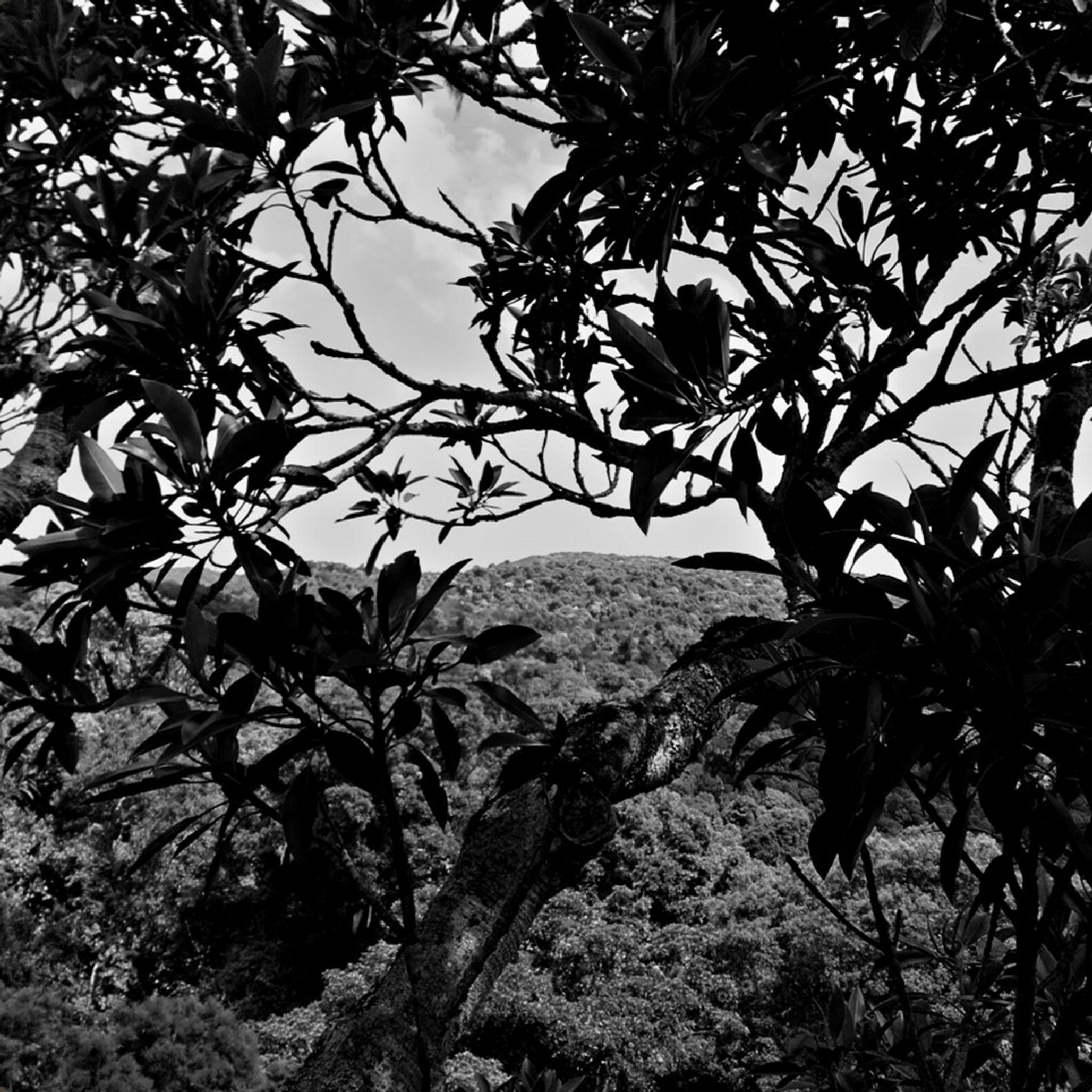 Photo in Black and White #trees #tree #branches #view #landscape