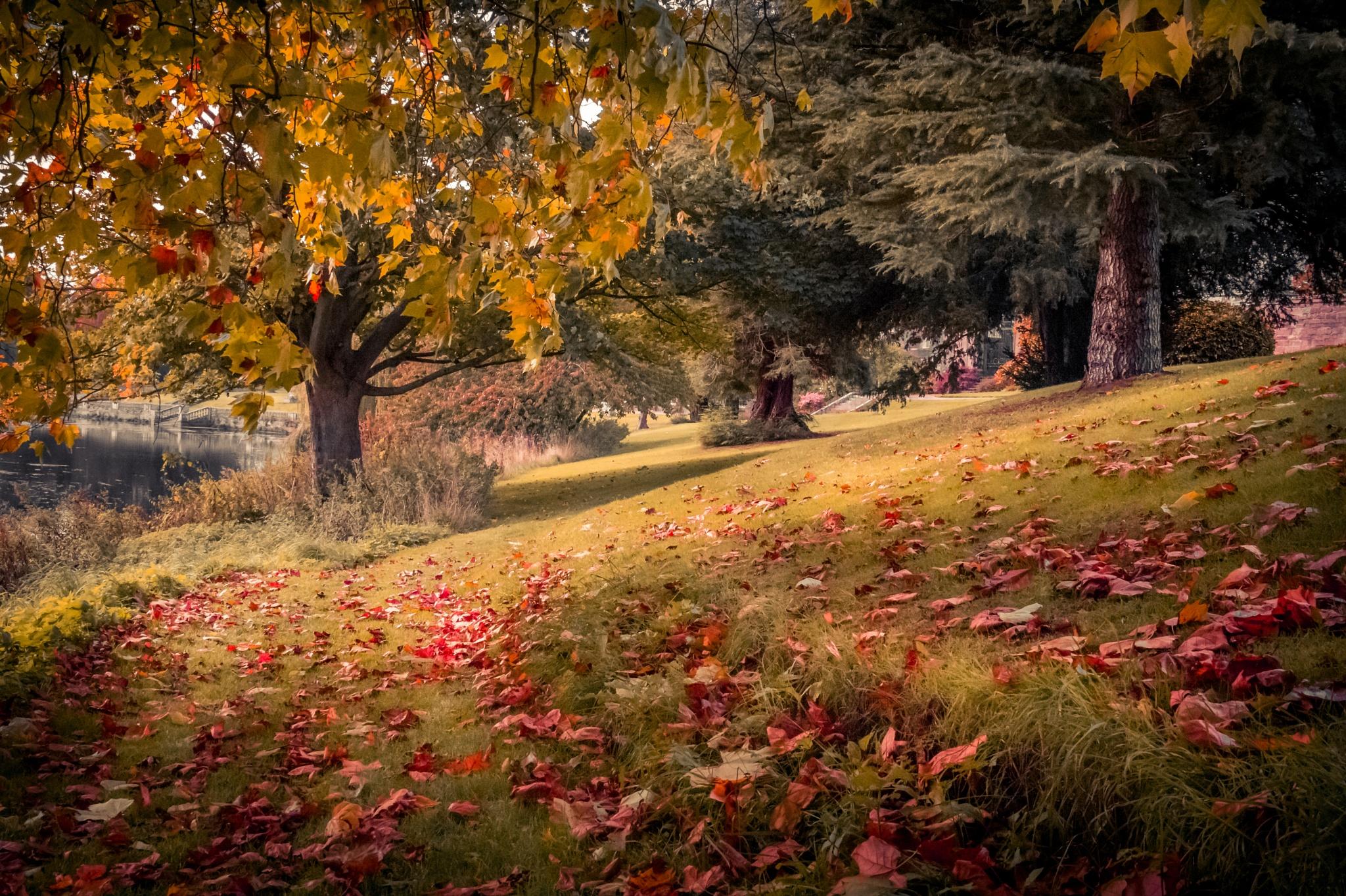 Stoneleigh Woods II by Fabio Rodrigues