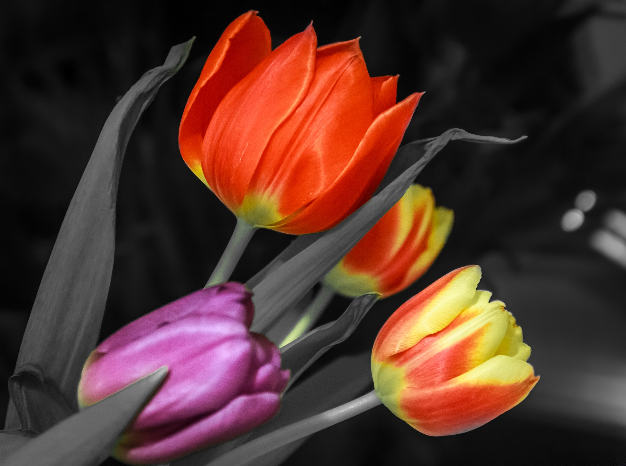 Tulips by Fabio Rodrigues