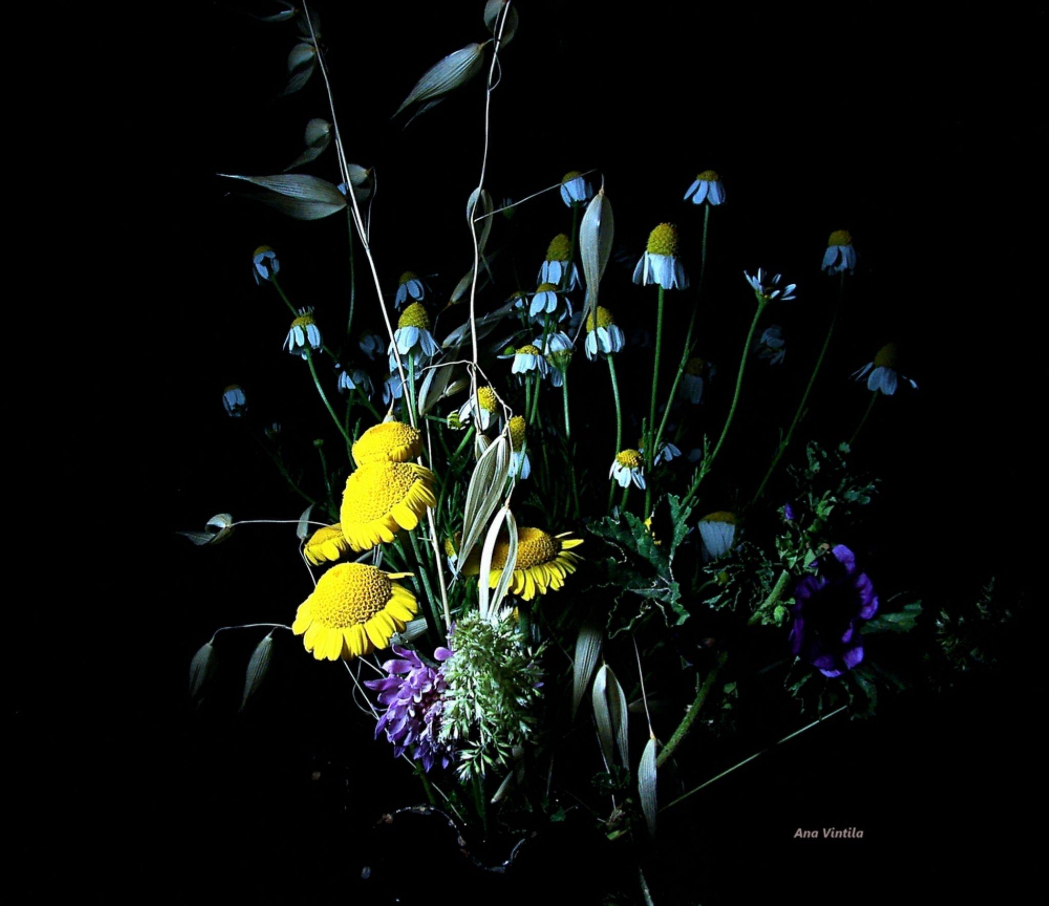 Wildflowers by vintilaana (Anny V. Art photography)