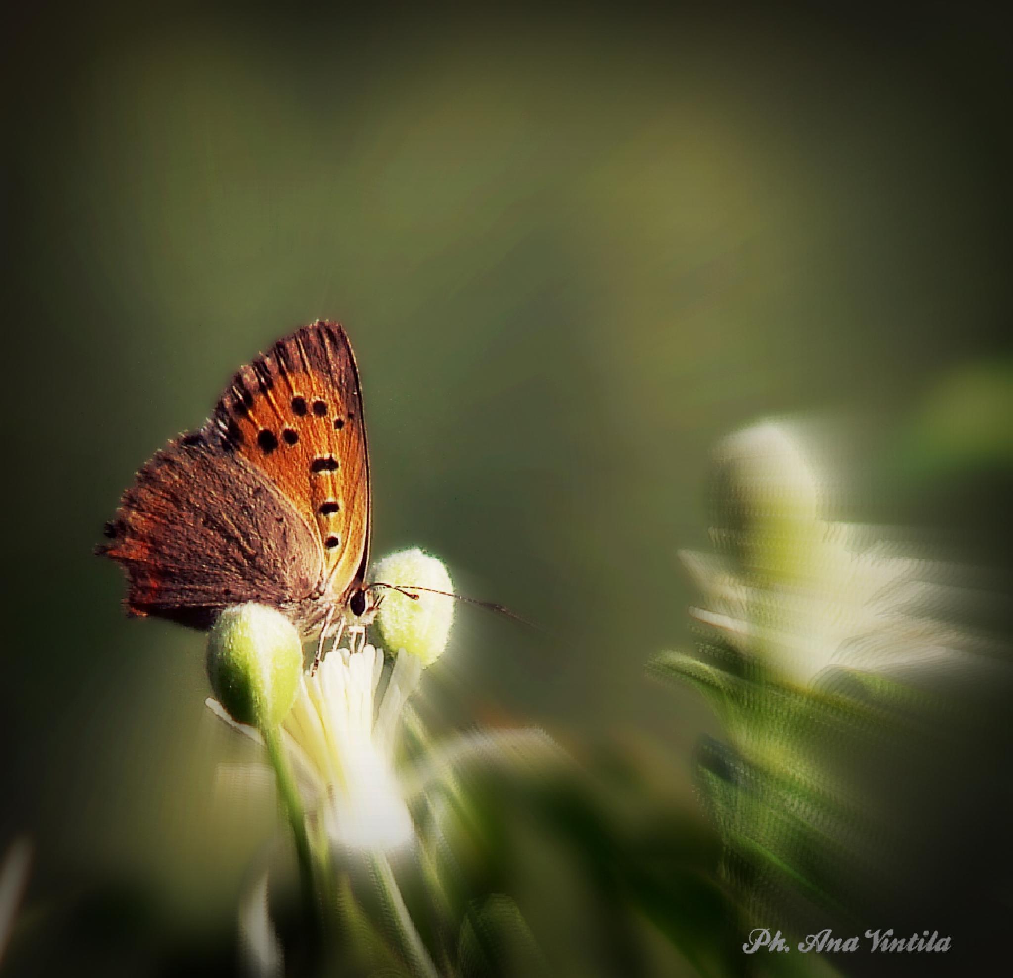 Farfalla by vintilaana (Anny V. Art photography)